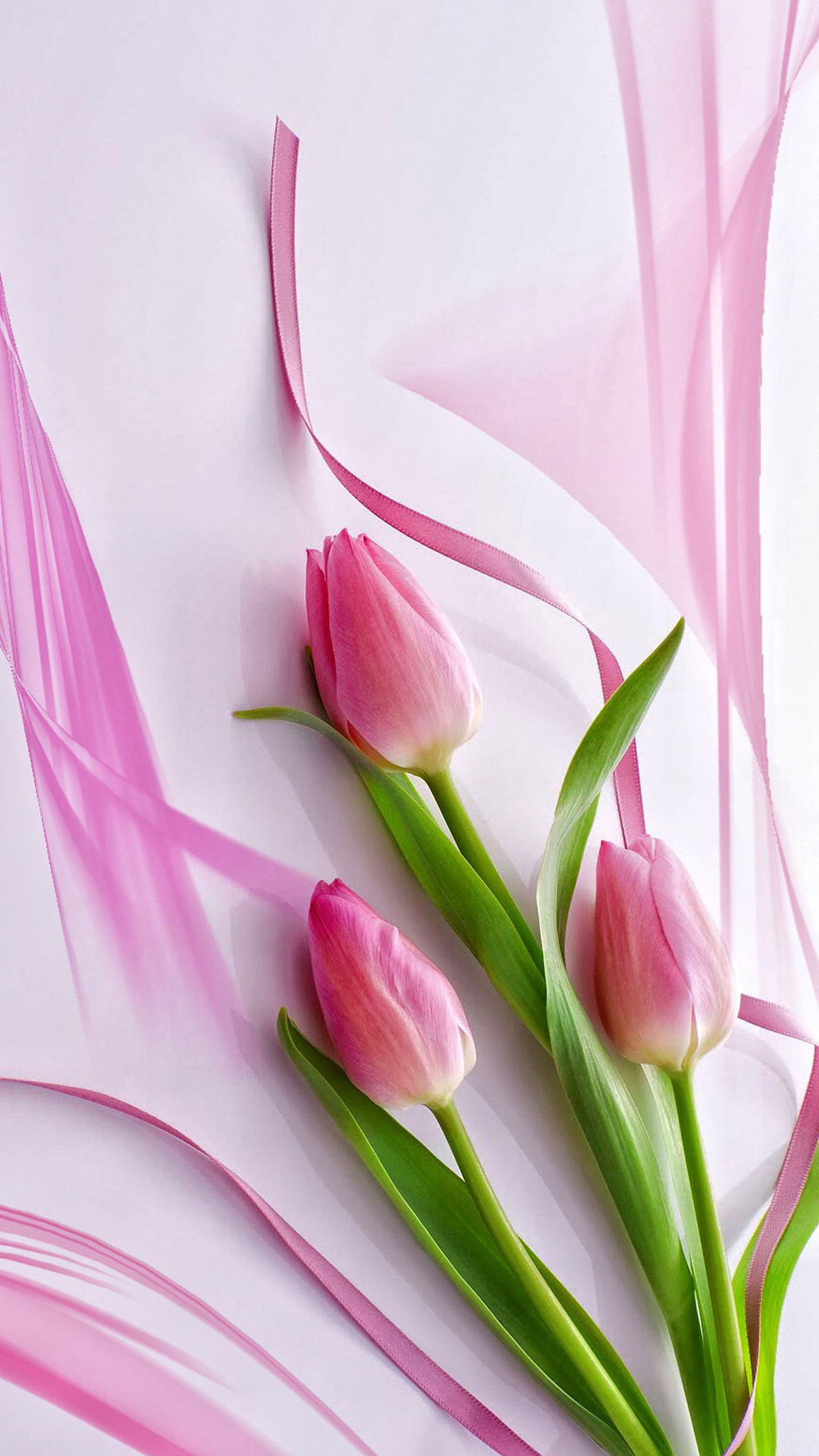 Tulips Wallpapers 63 Pictures