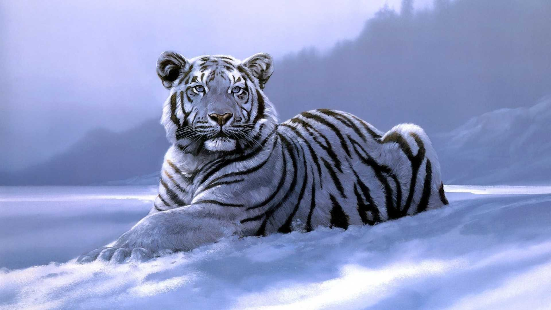 White Tiger Wallpaper Hd 59 Pictures