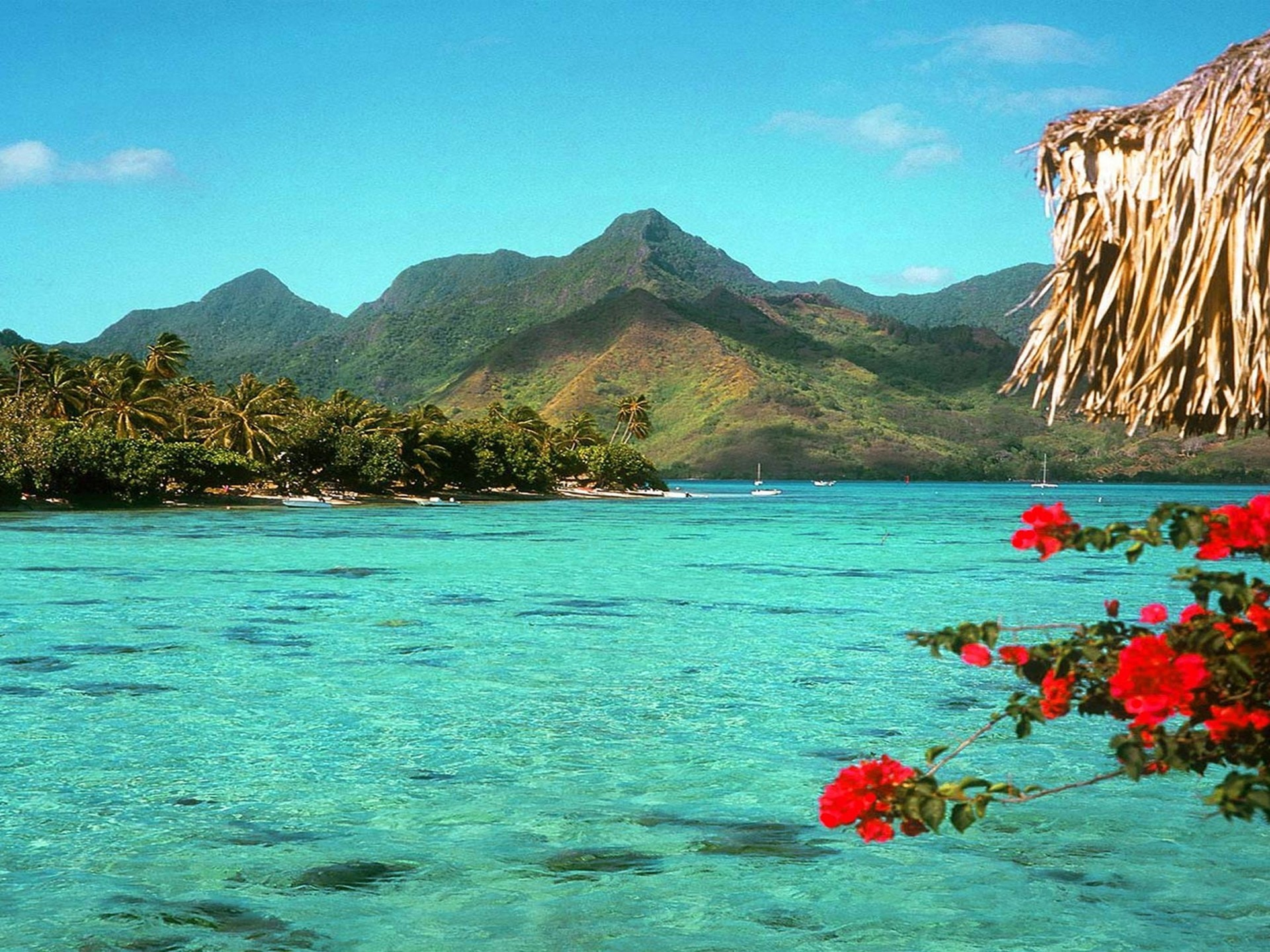 Tropical Beach Wallpaper 68 Pictures