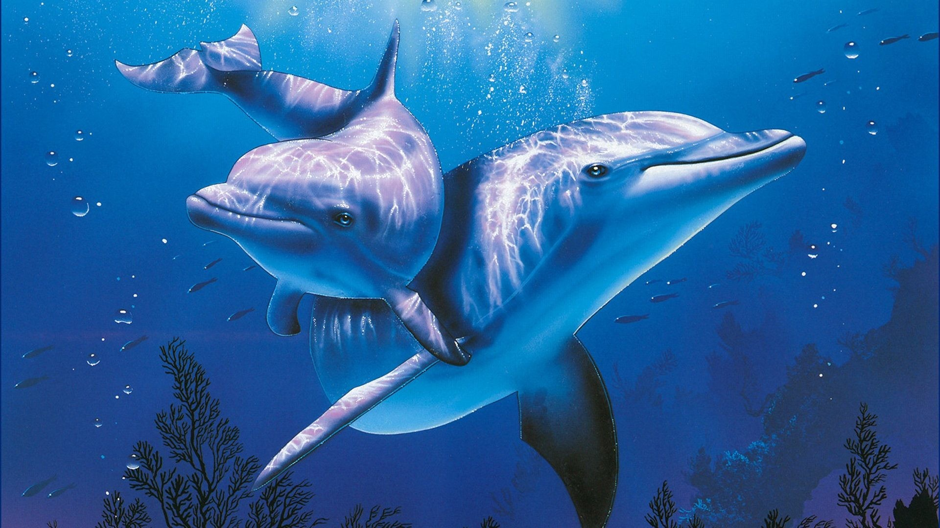 Sea Animals Wallpapers 51 Pictures