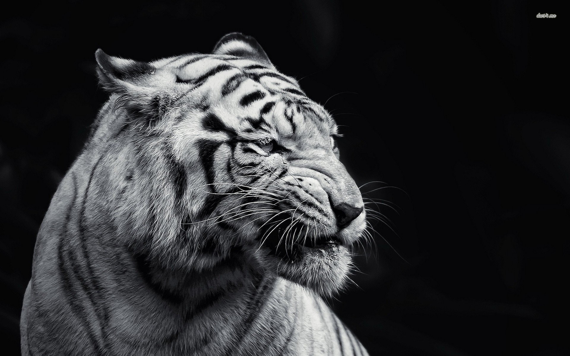 Black And White Animal Wallpaper 67 Pictures