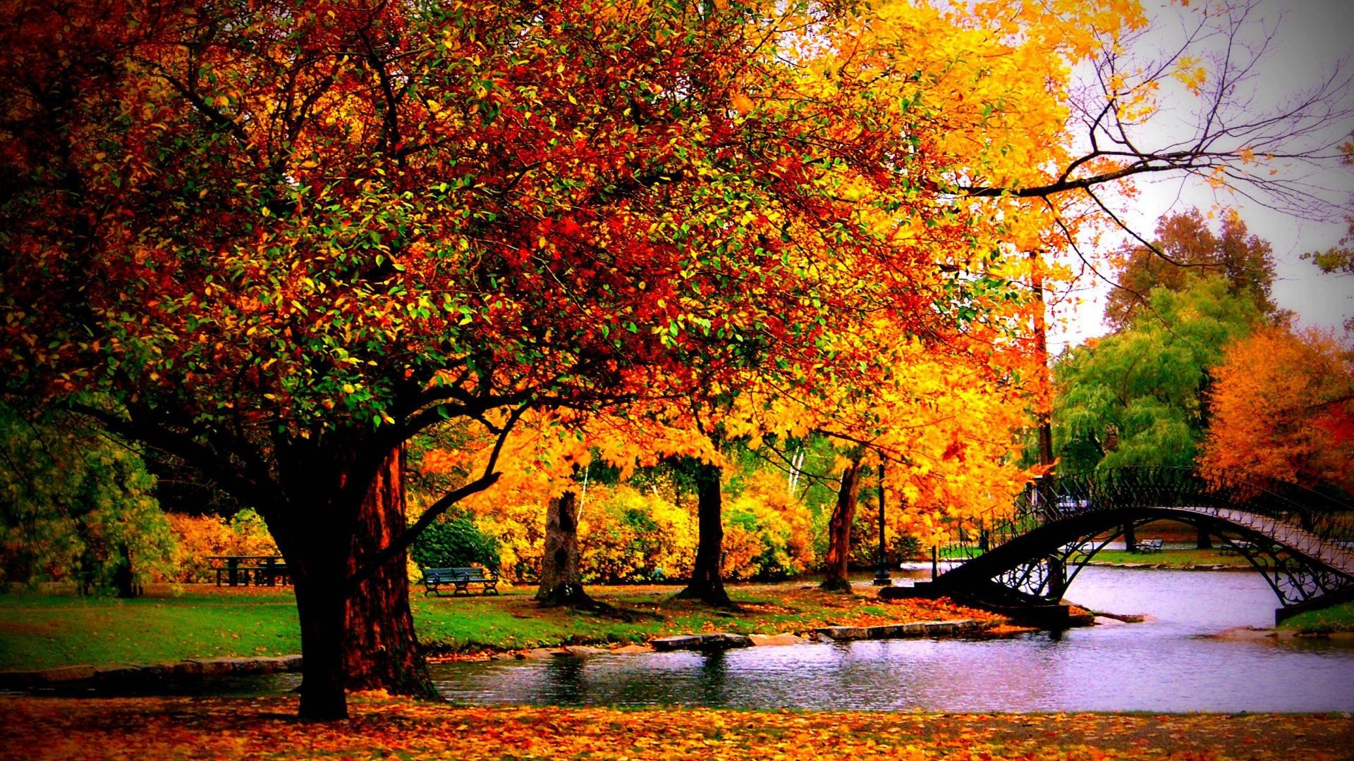 Fall Pictures For Desktop Wallpaper 62 Pictures