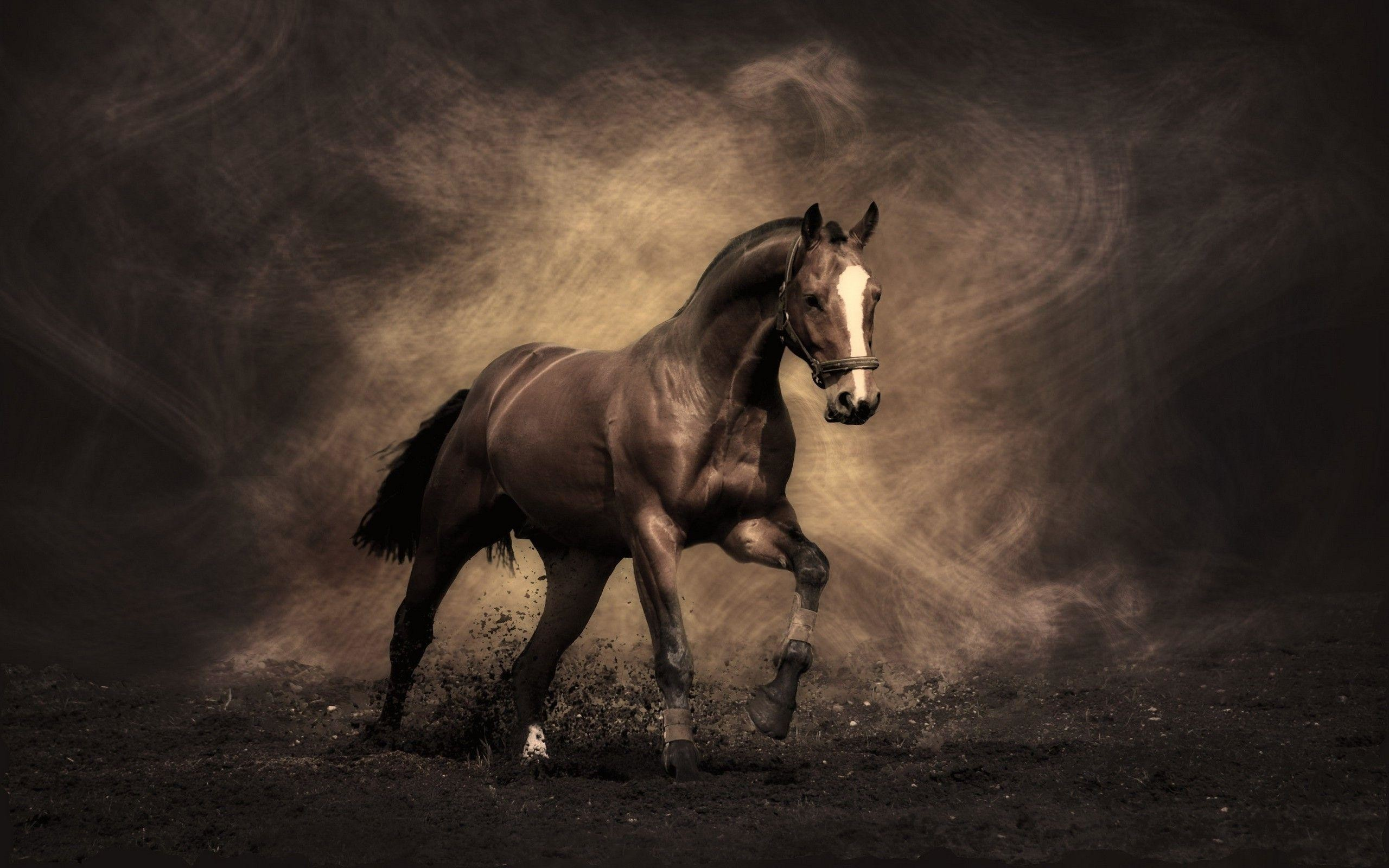Wallpapers Of Horses 69 Pictures