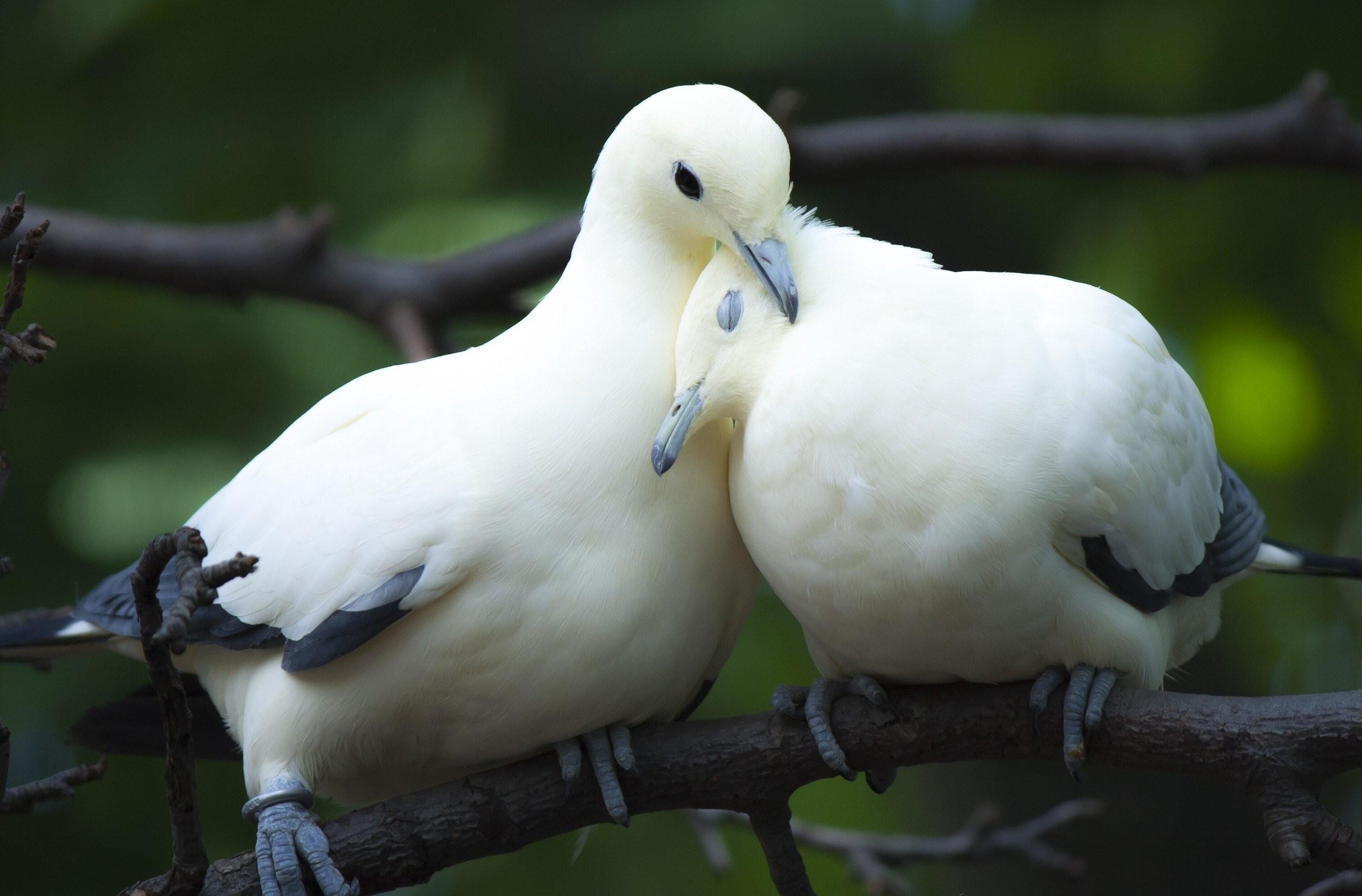 چسب پرنده yukle.mobi