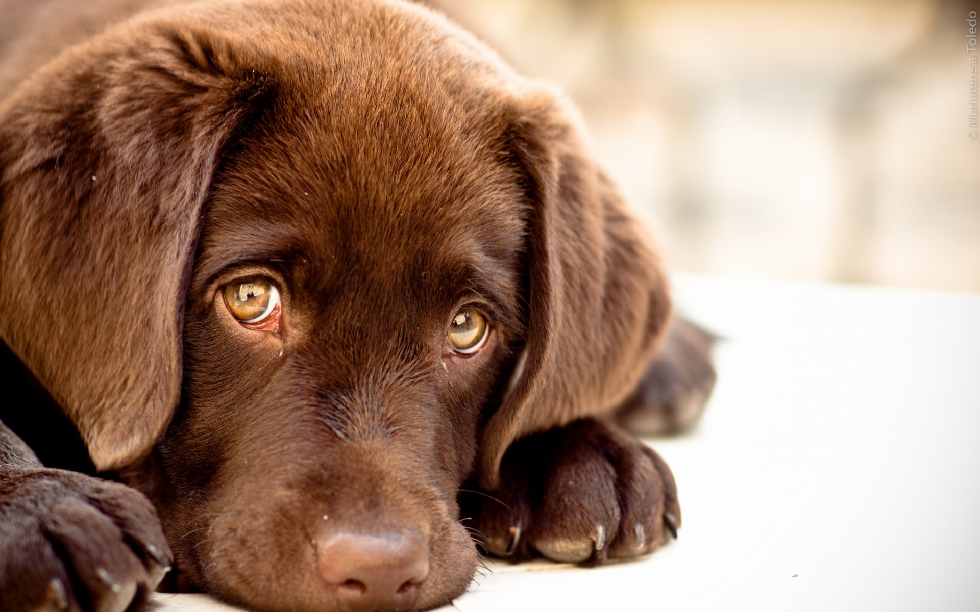 Dog Wallpapers 62 Pictures