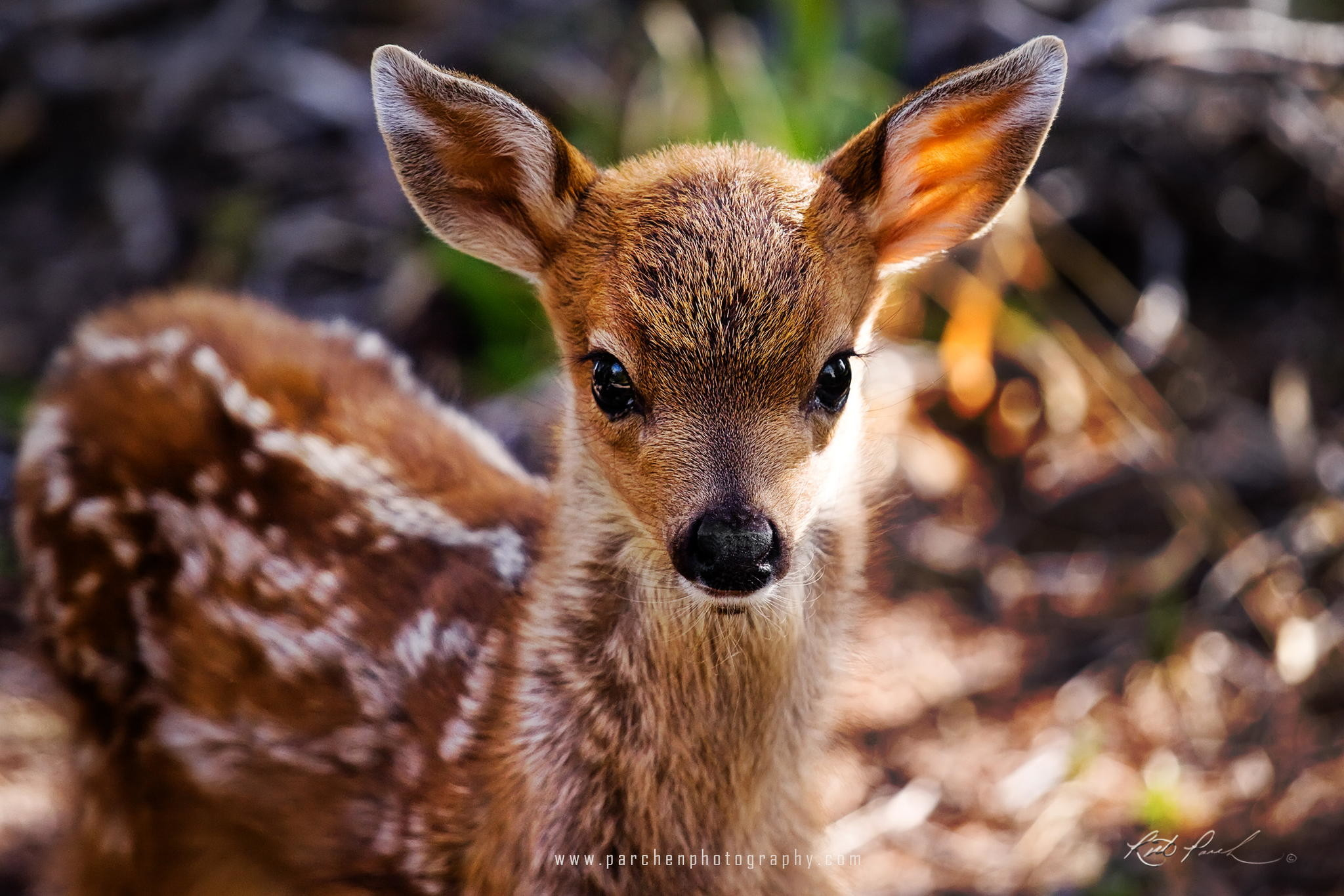 Cute Baby Animal 2018 Wallpaper (72+ pictures)