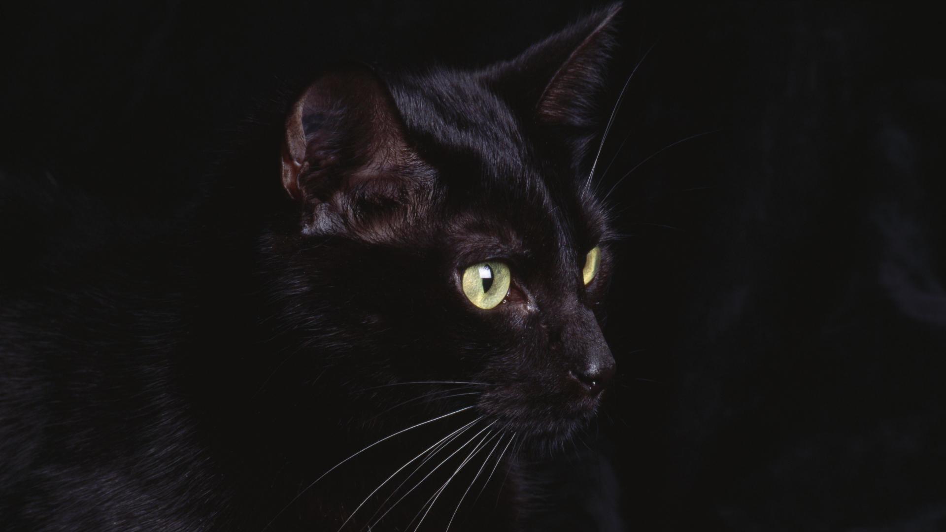 Black Cat 21 Cool Hd Wallpaper 1920x1080