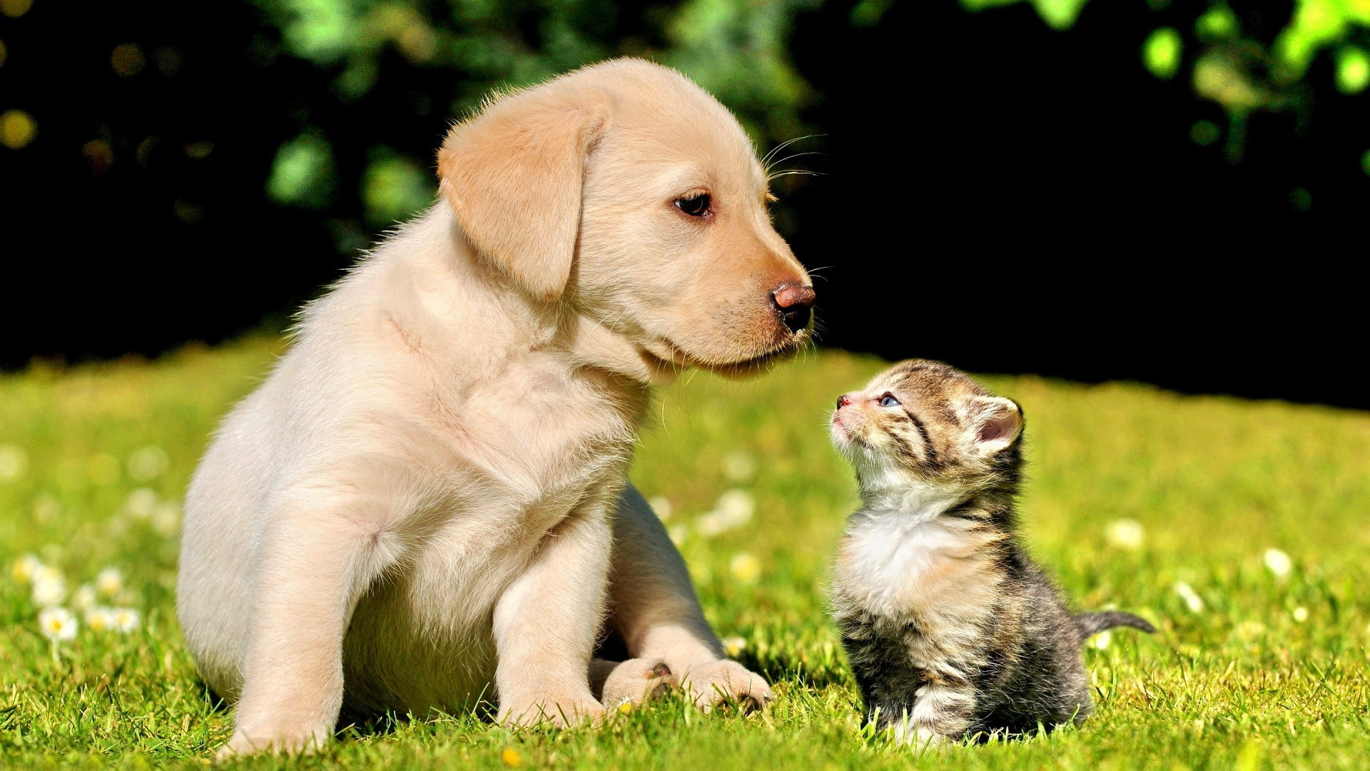 Best Friends Forever Wallpaper 70 Pictures: Best Friends Forever Wallpaper (70+ Pictures