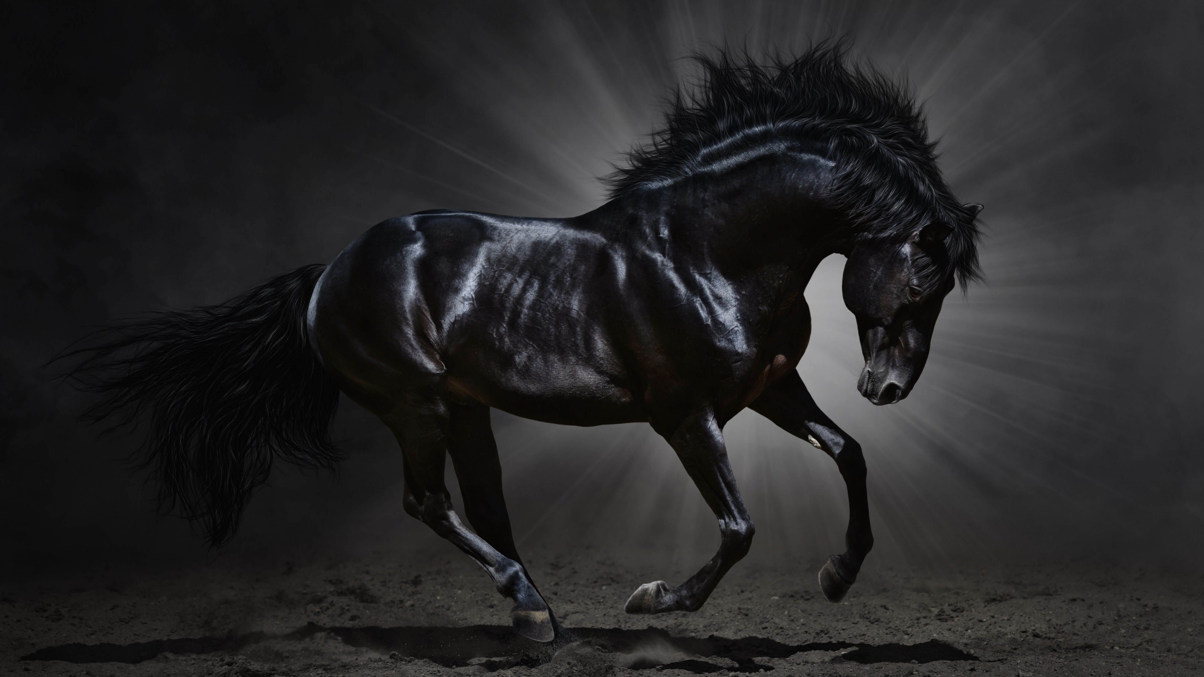 Equestrian Wallpaper 56 Pictures