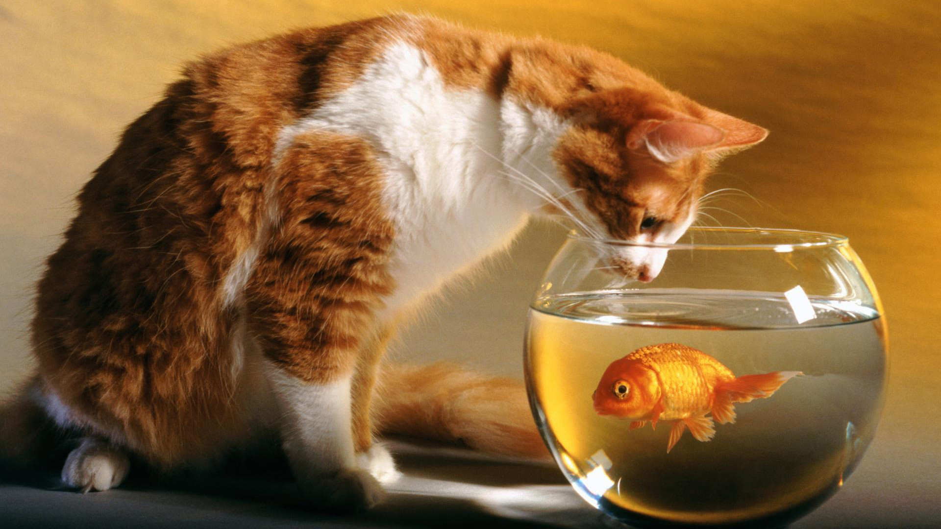 fish tank wallpaper hd for desktop full screen flower download
