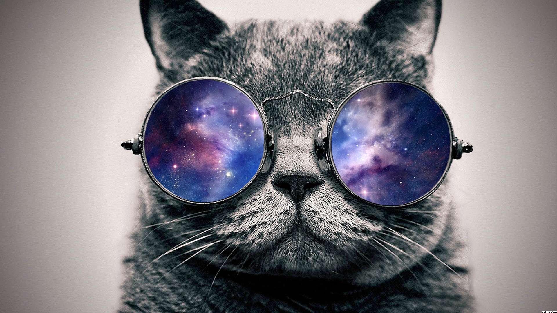 Galaxy cat 1920x1080