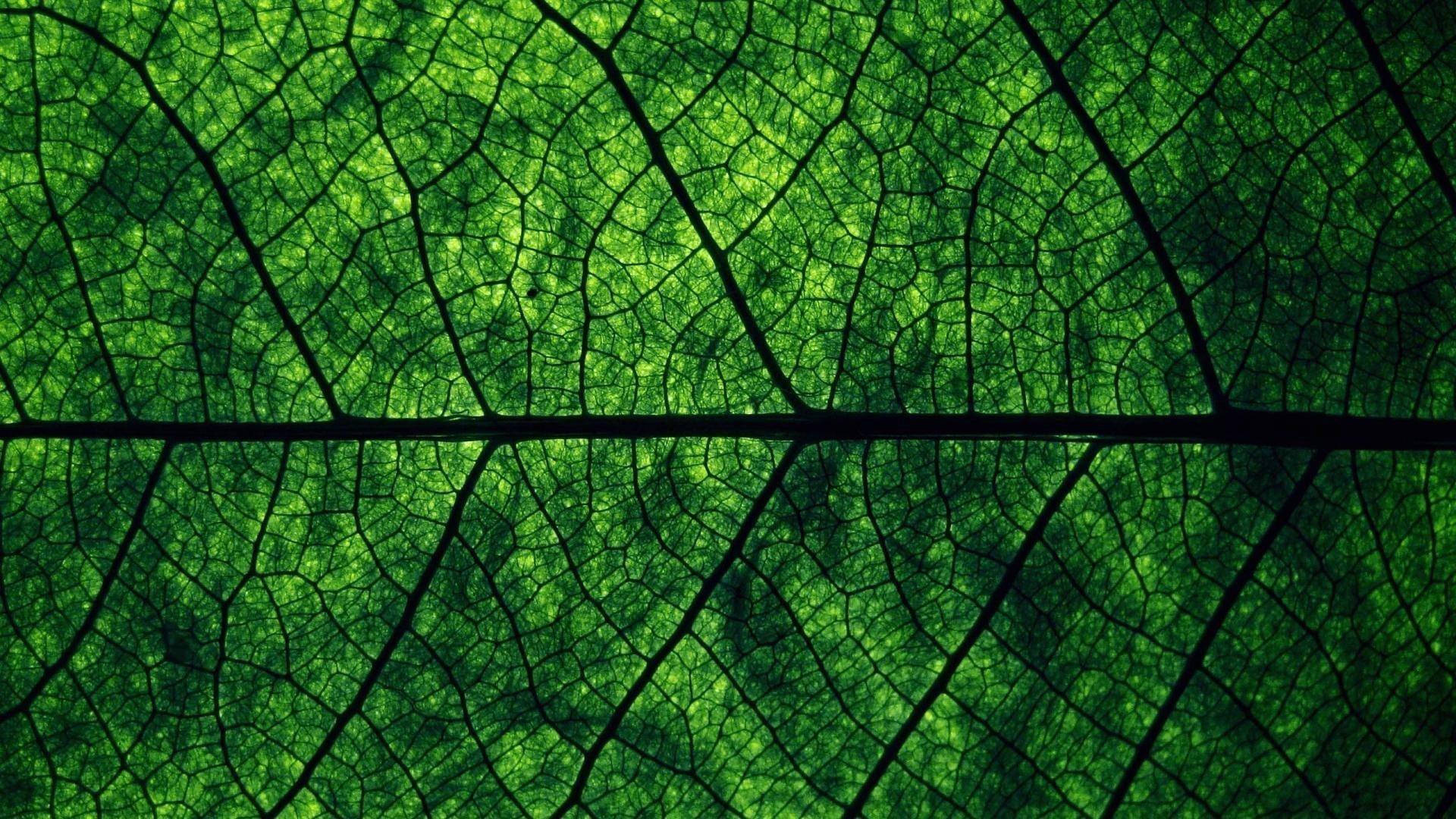dark green wallpaper 78 pictures
