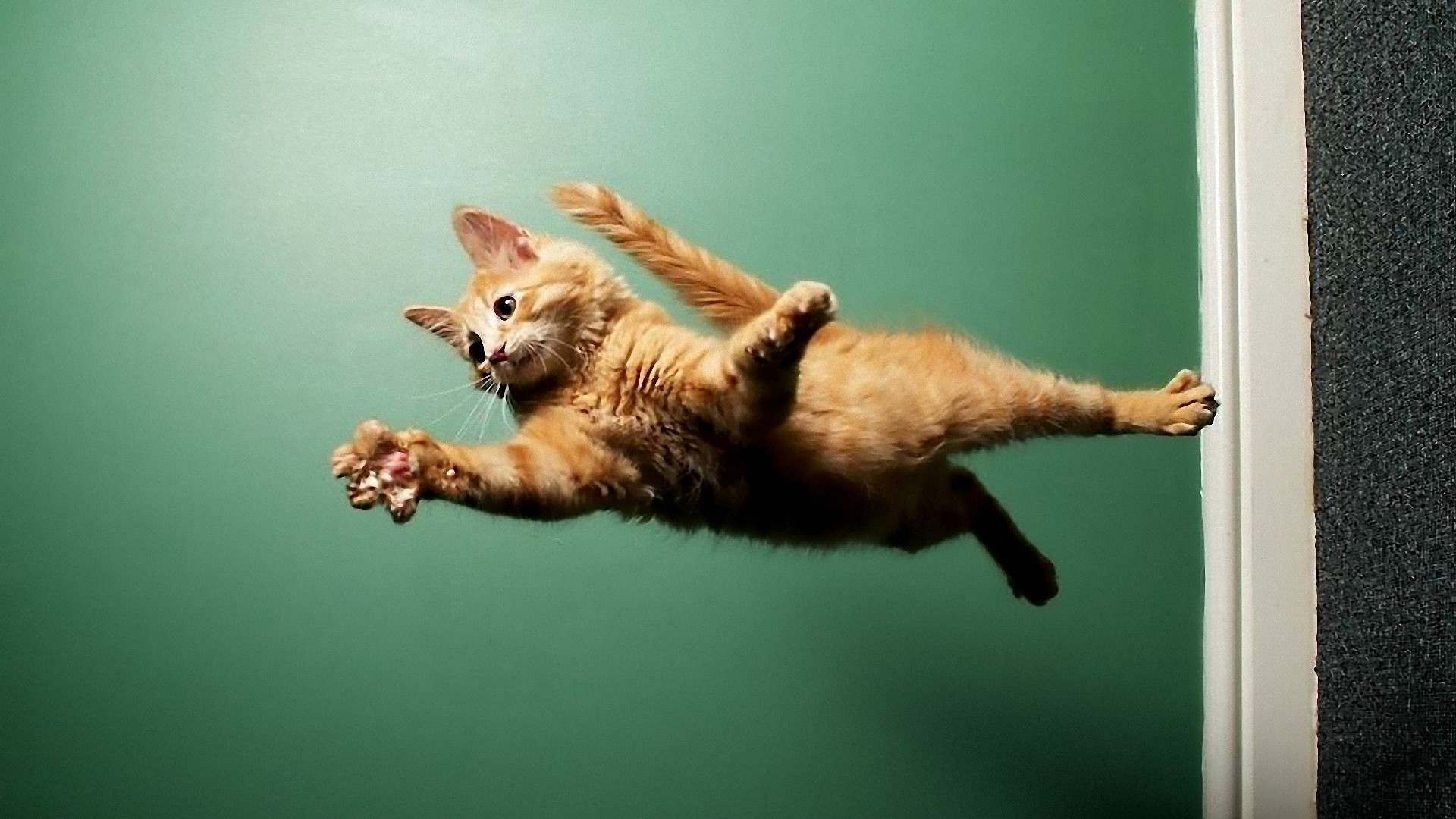 cool cat on wall HD wallpapers 1920x1080