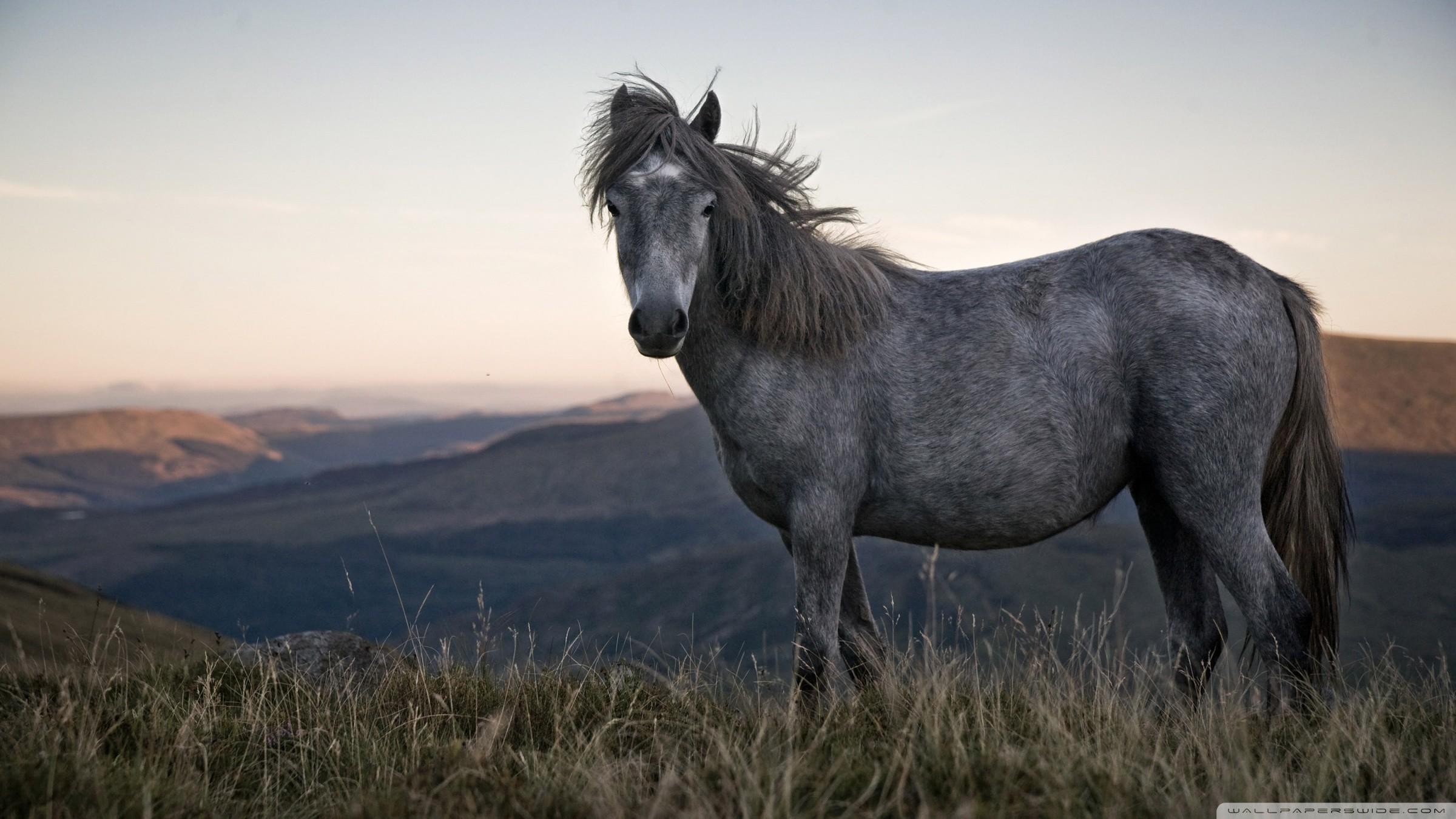 Wild Horses Wallpaper 59 Pictures
