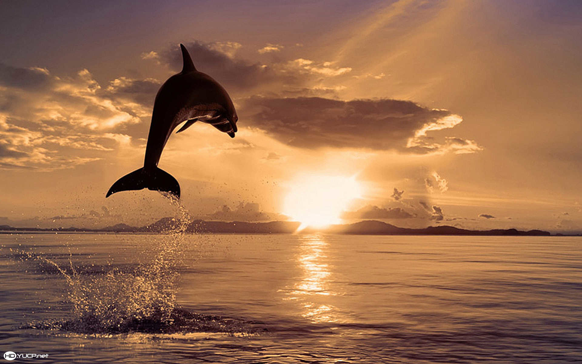 Dolphins Wallpaper 67 Pictures