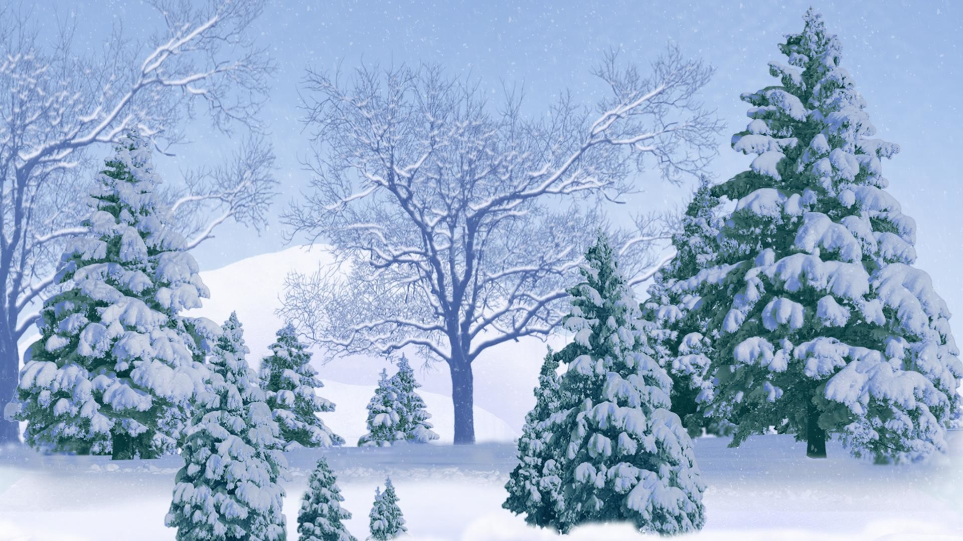 Pine Tree Background 59 Pictures