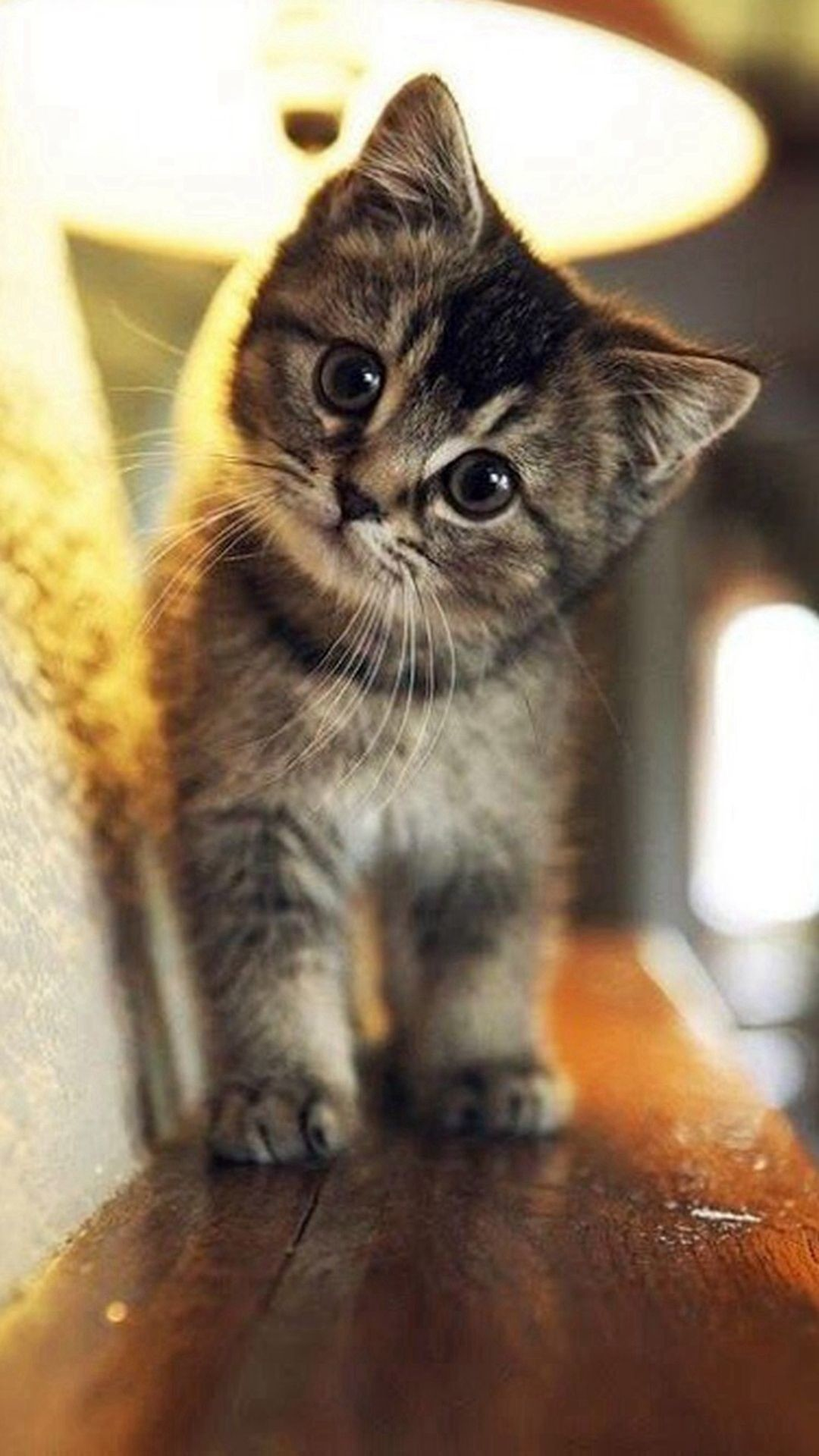 Cat Wallpapers 84 Pictures