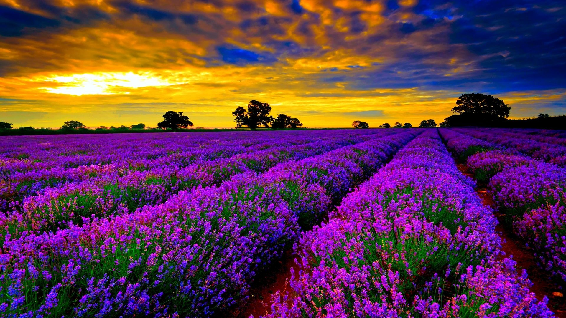 Most Beautiful Background 67 Pictures