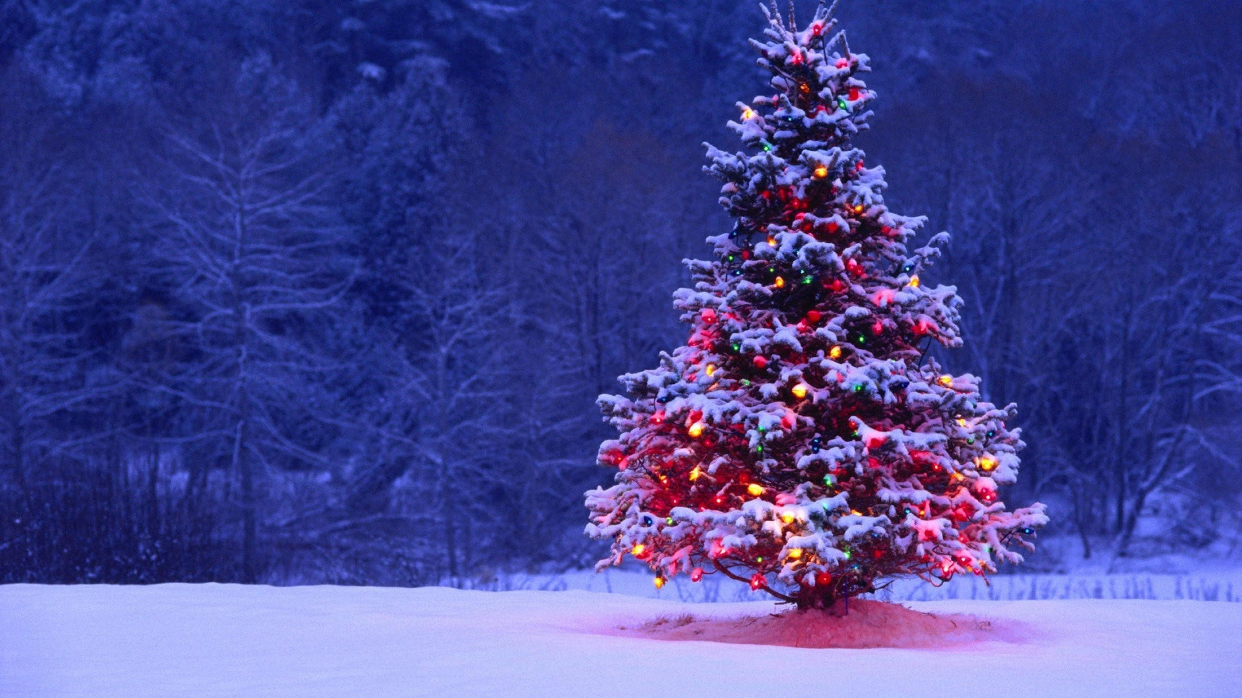 Christmas Tree Desktop Backgrounds 64 Pictures
