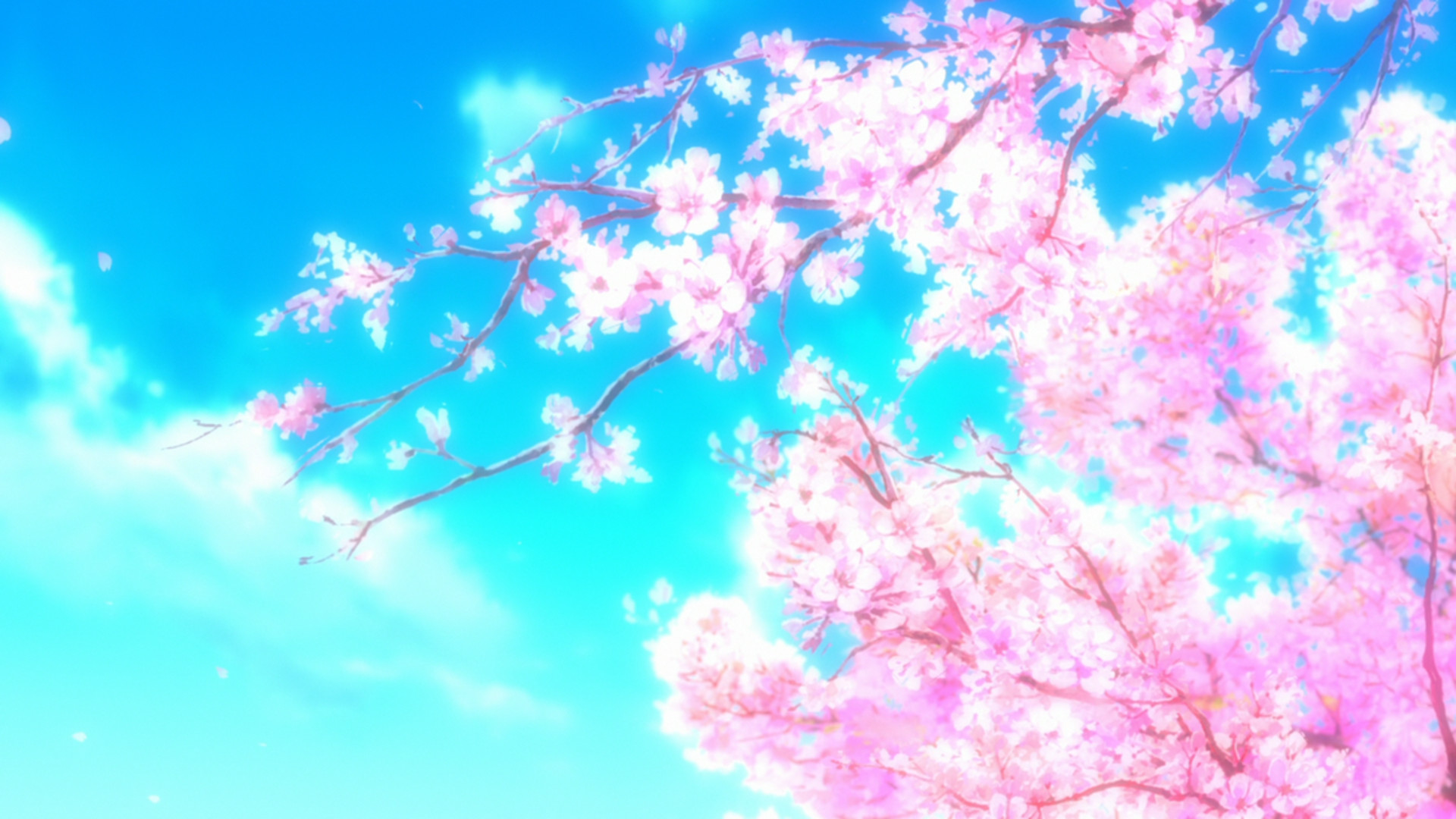 Free Cherry Blossom Flowers Photography Wallpapers Hd
