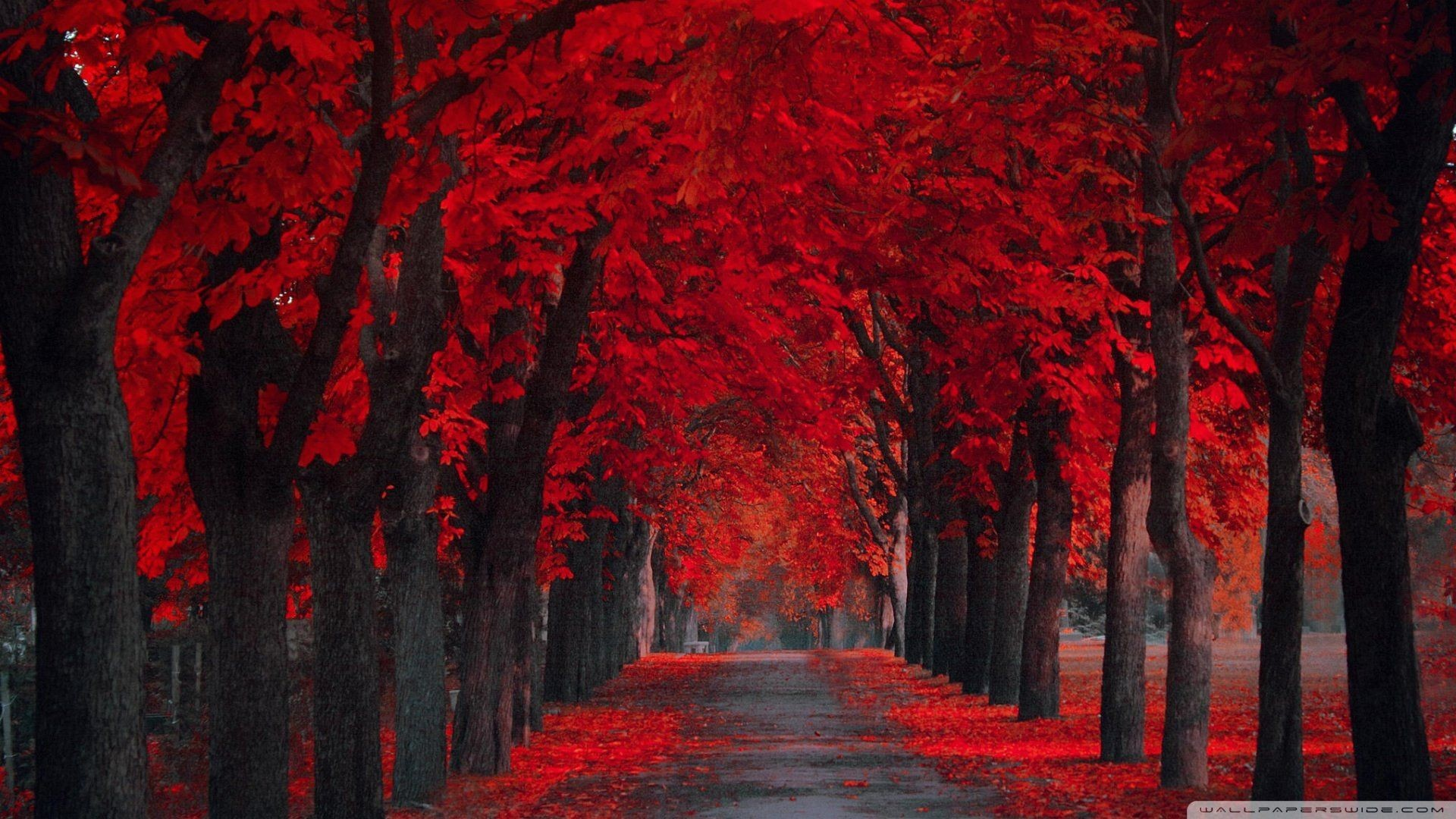 Red Wallpaper For Desktop 73 Pictures