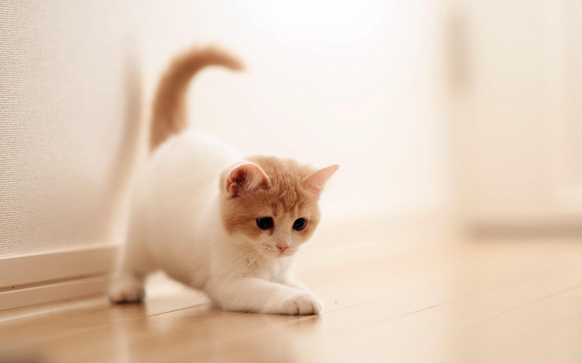 Cute Cat Background 70 Pictures