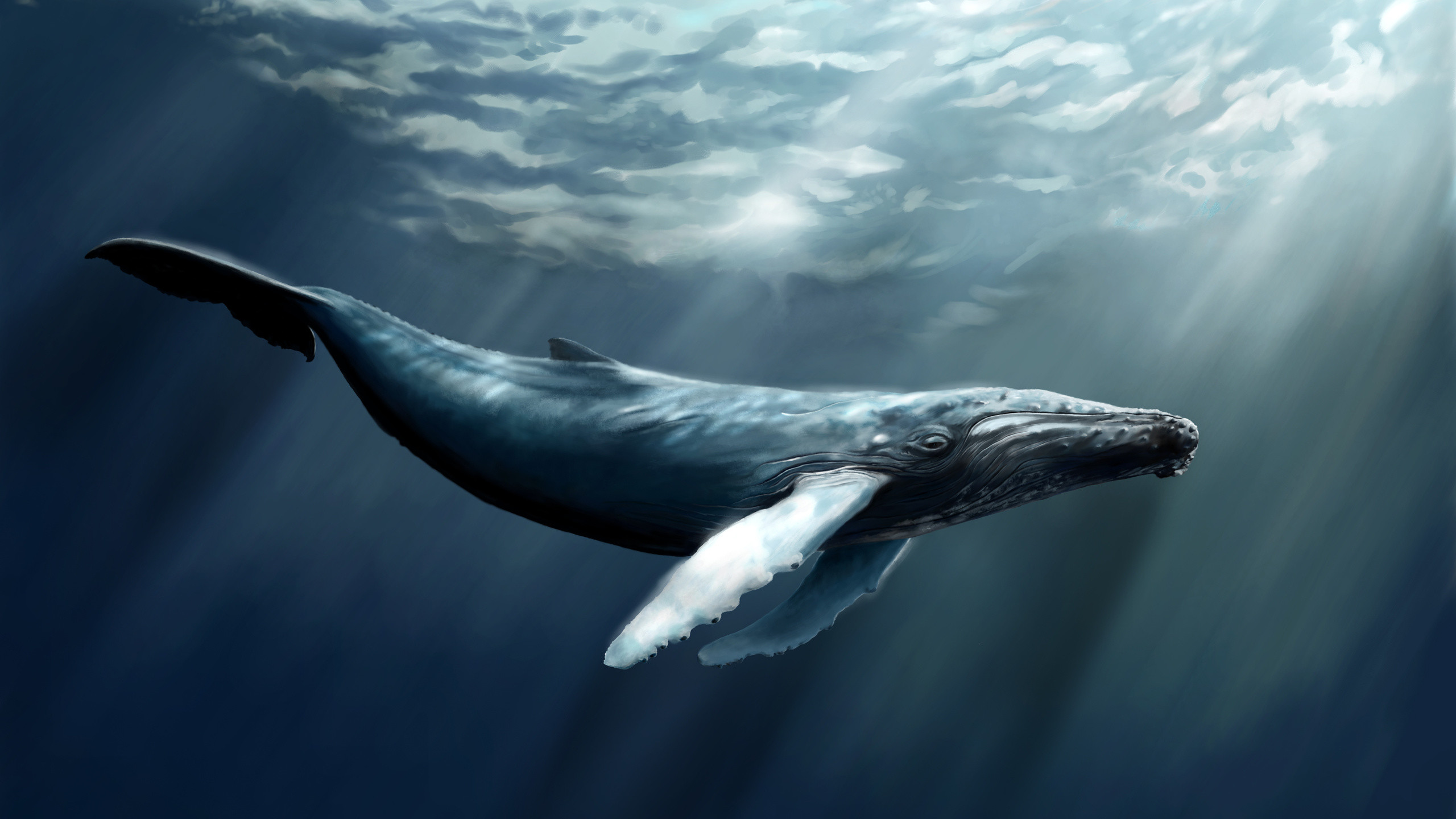 Humpback Whale Wallpaper 62 Pictures