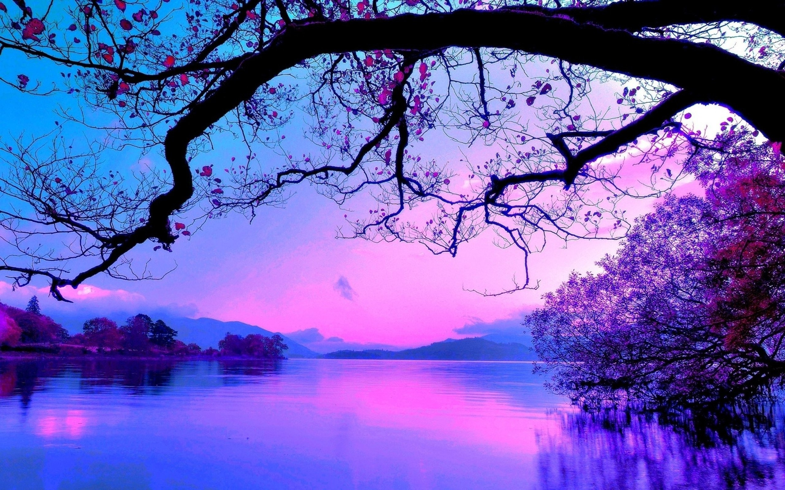 purple sunset tree nature water hd landscape wallpapers beauty background desktop cool 1440 2560 sky plant lake comments imgur cp