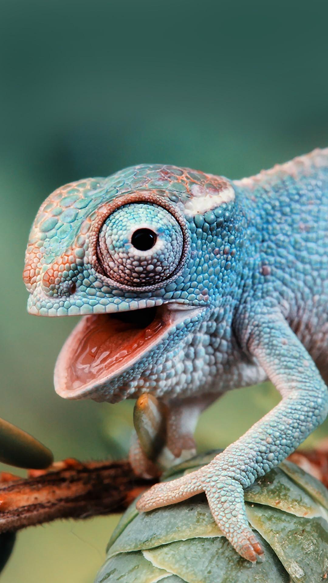 Chameleon Wallpaper 76 Pictures