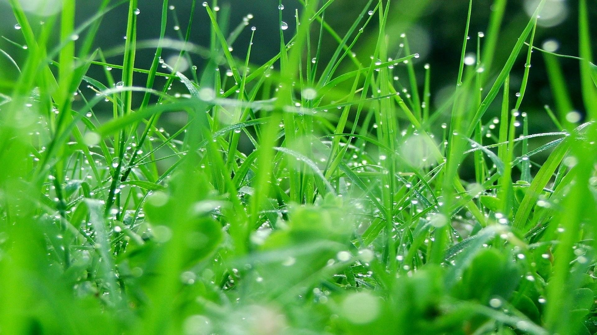 Hd Grass Wallpaper 75 Pictures