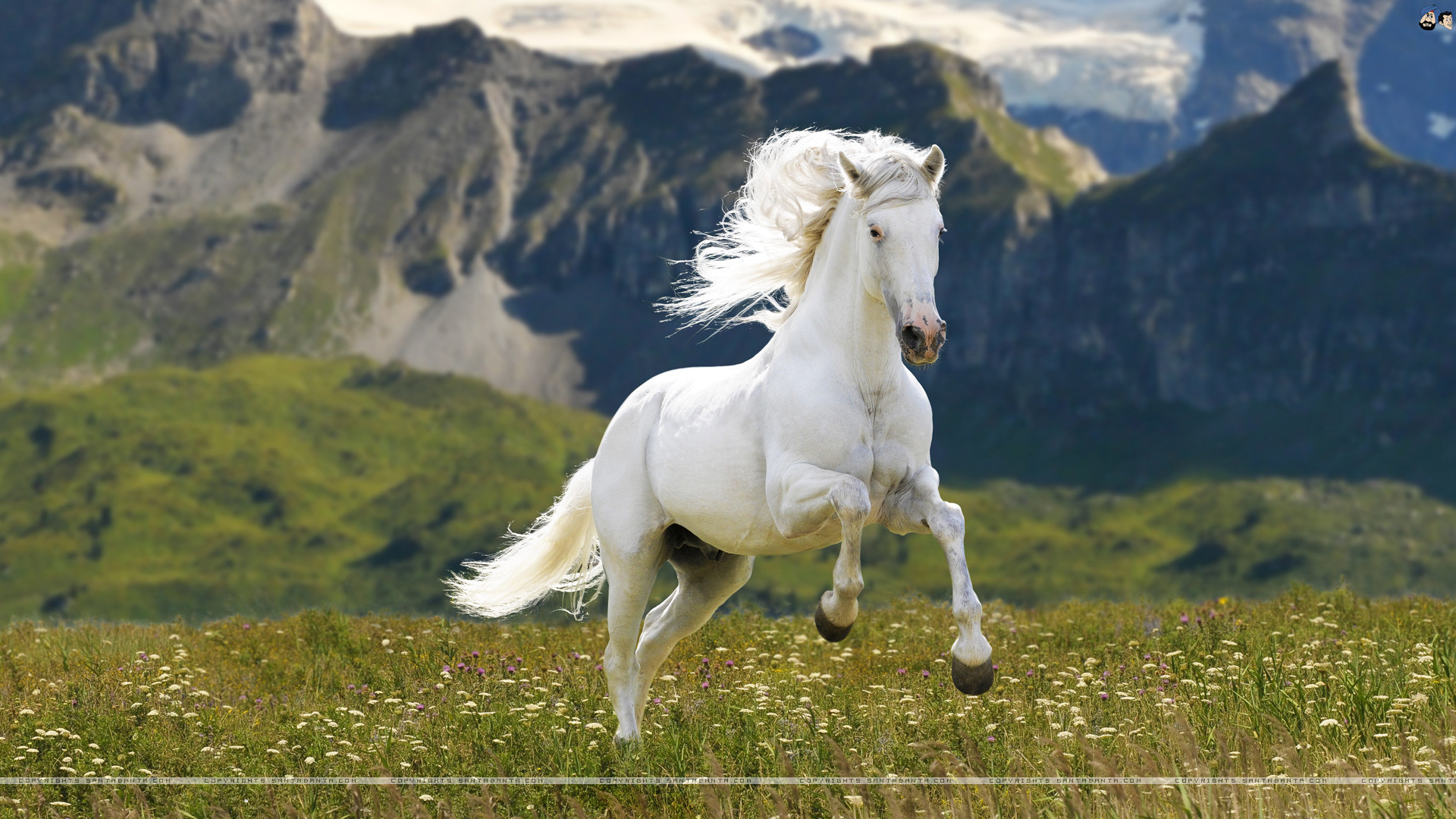 Horse Wallpaper Images 69 Pictures