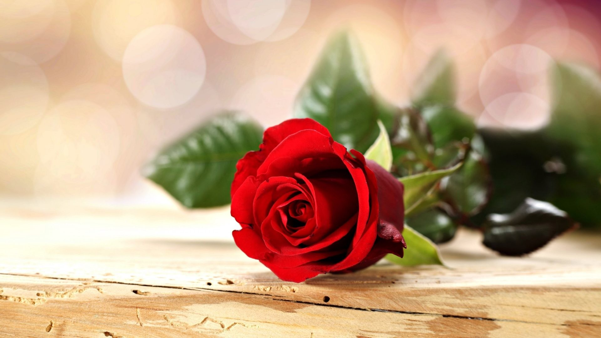 Red Rose Love Wallpaper 52 Pictures