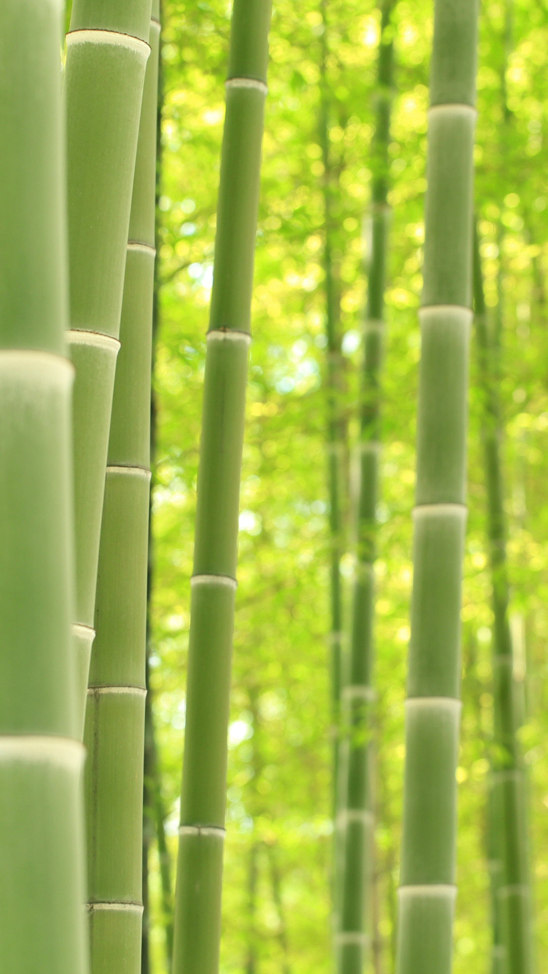 Green Bamboo Wallpaper 63 Pictures