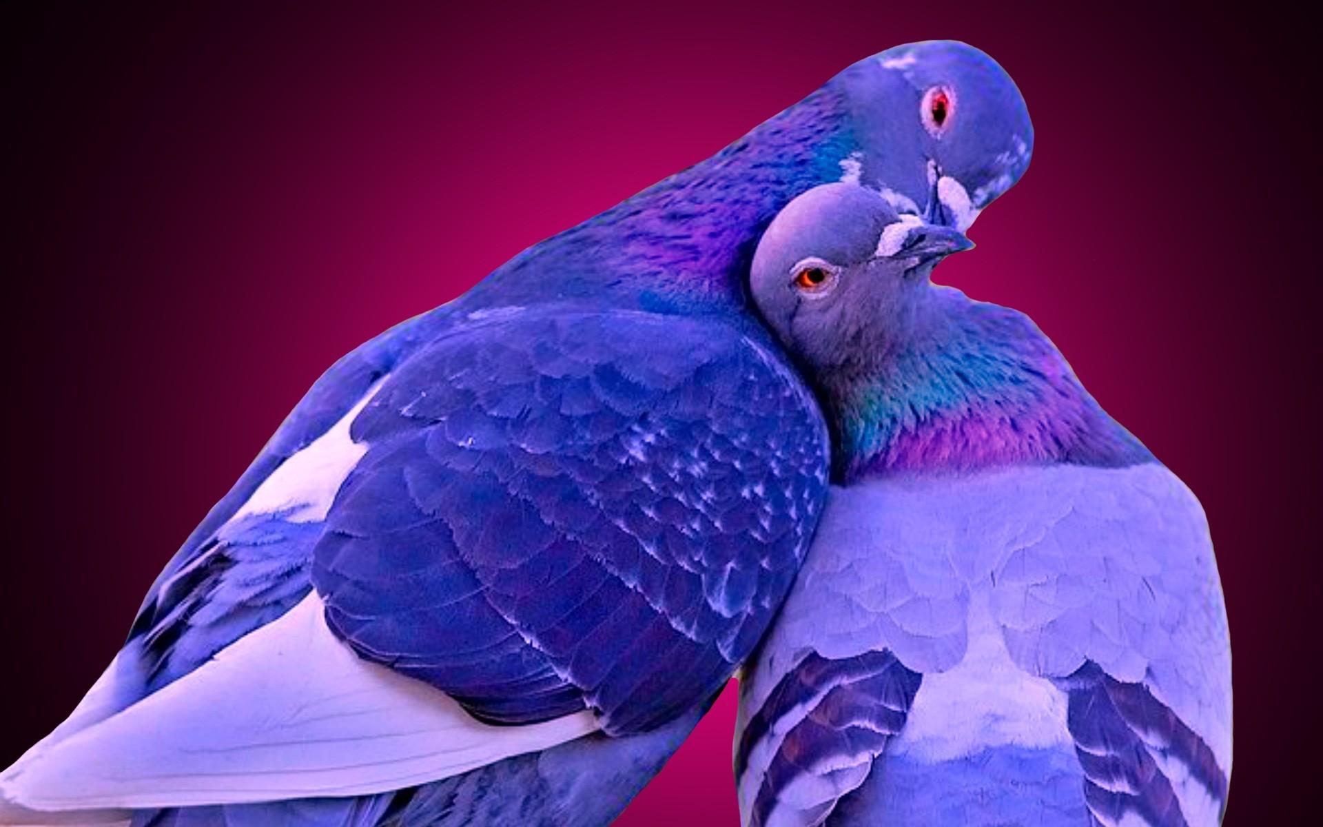 Tweety Bird Wallpaper 60 Pictures