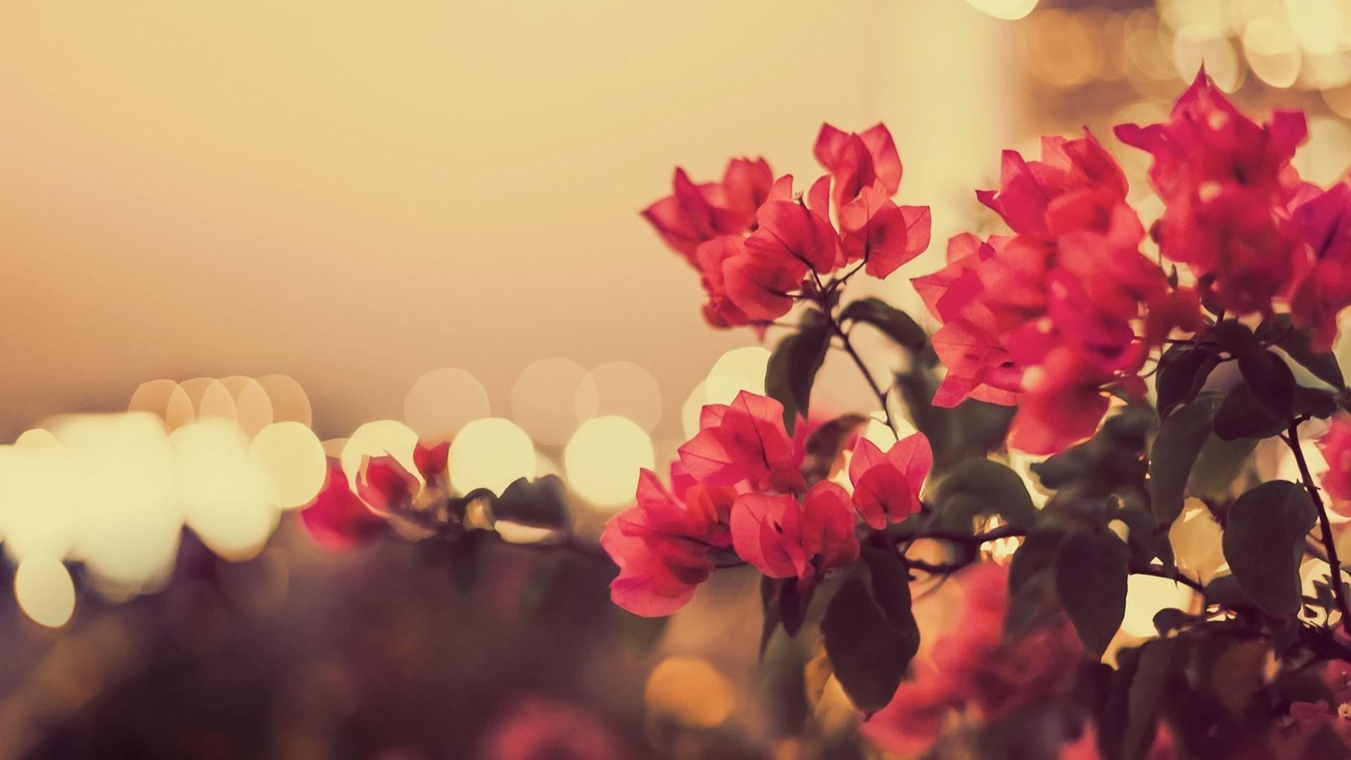 Vintage Flower Backgrounds 49 Pictures