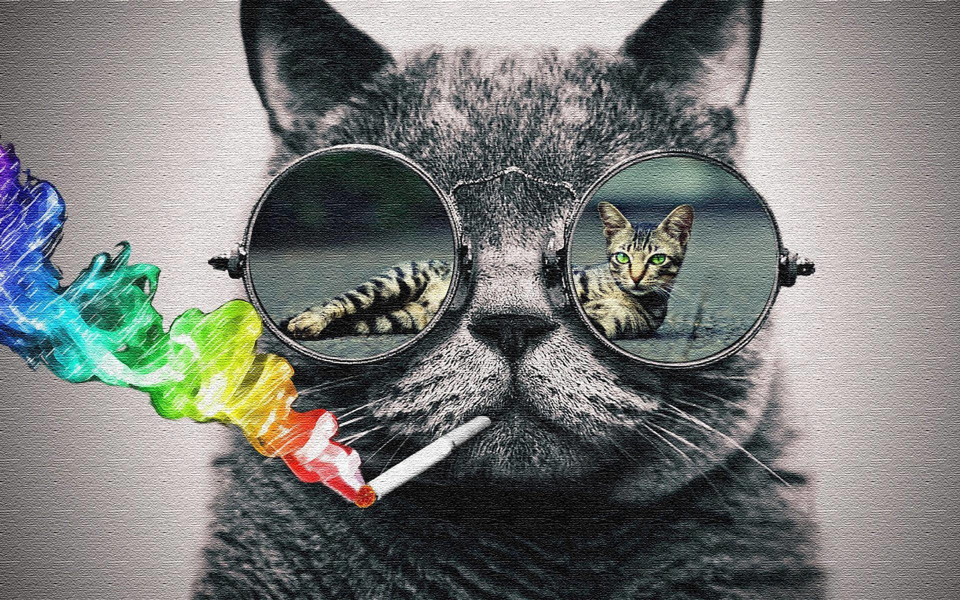 Cat with sunglasses wallpaper (Photoshop) - rank them please 1920x1200