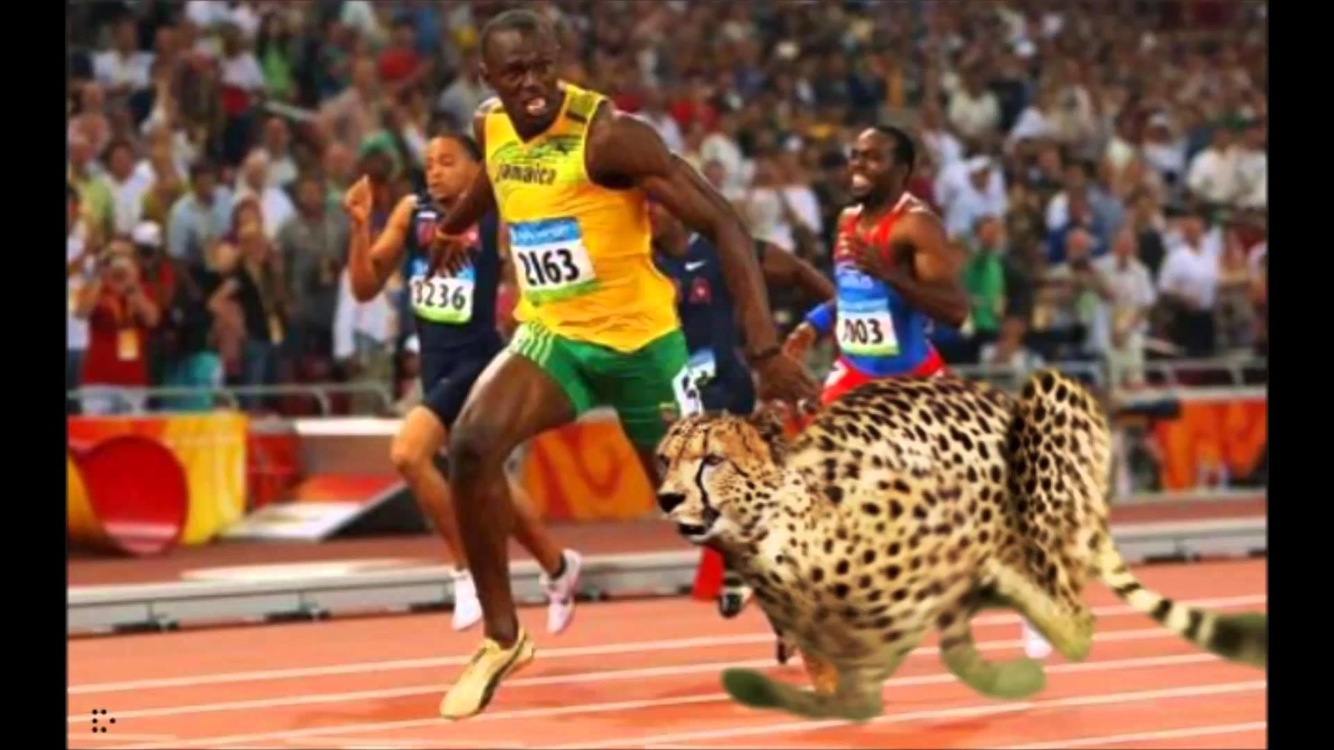 Usain Bolt Wallpapers 64 Pictures
