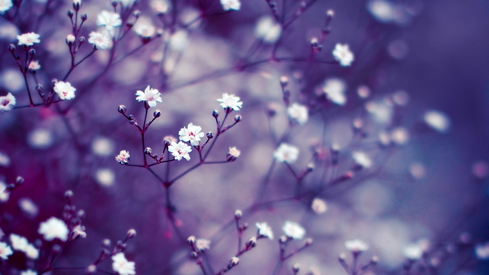 Lavender flower wallpaper 70 pictures lavender flower wide wallpaper 1920x1080 izmirmasajfo