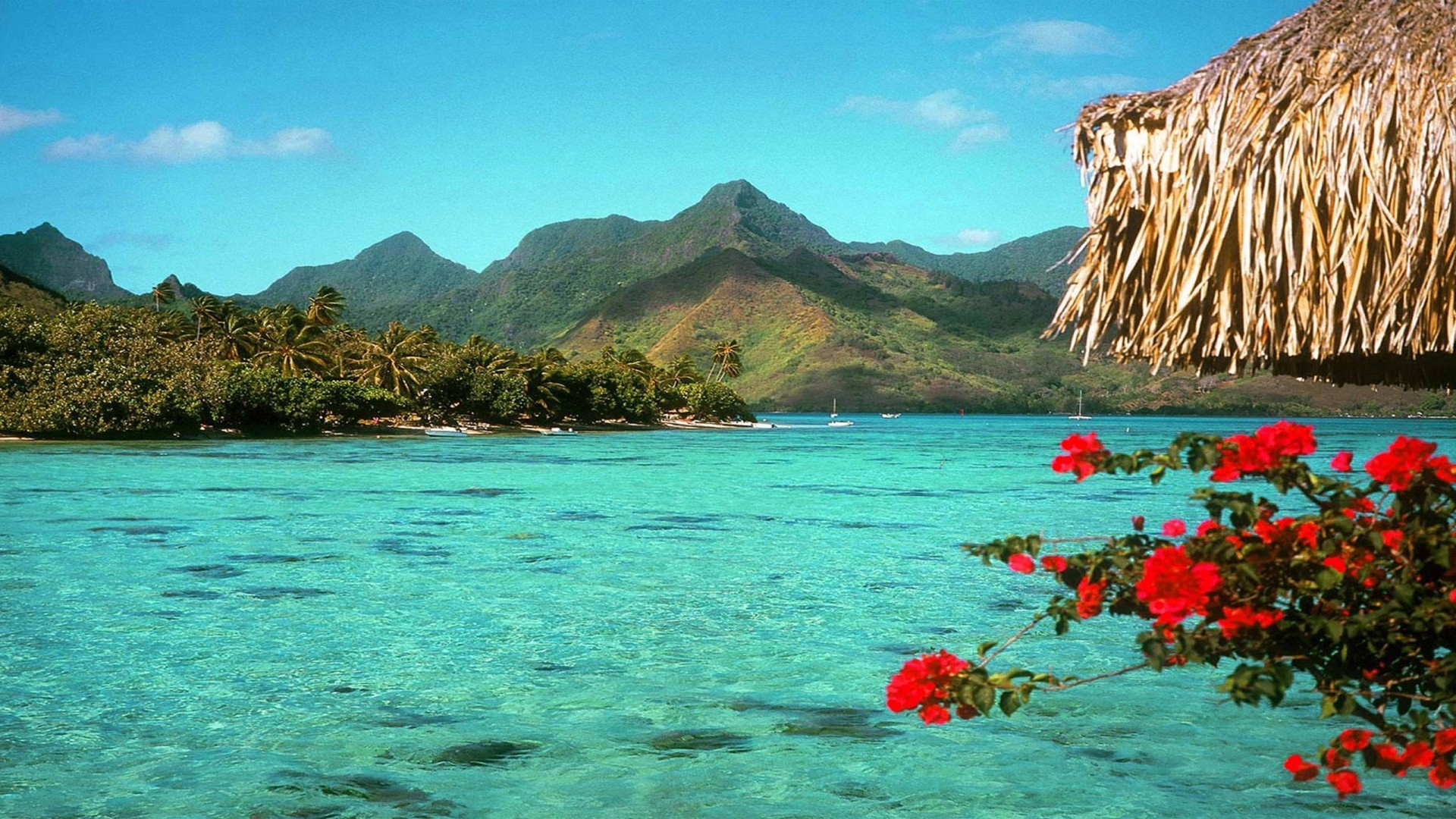 Tropical Paradise Beach Hd Wallpaper For Nexus 7 Screens: Beach Background Pictures (65+ Pictures