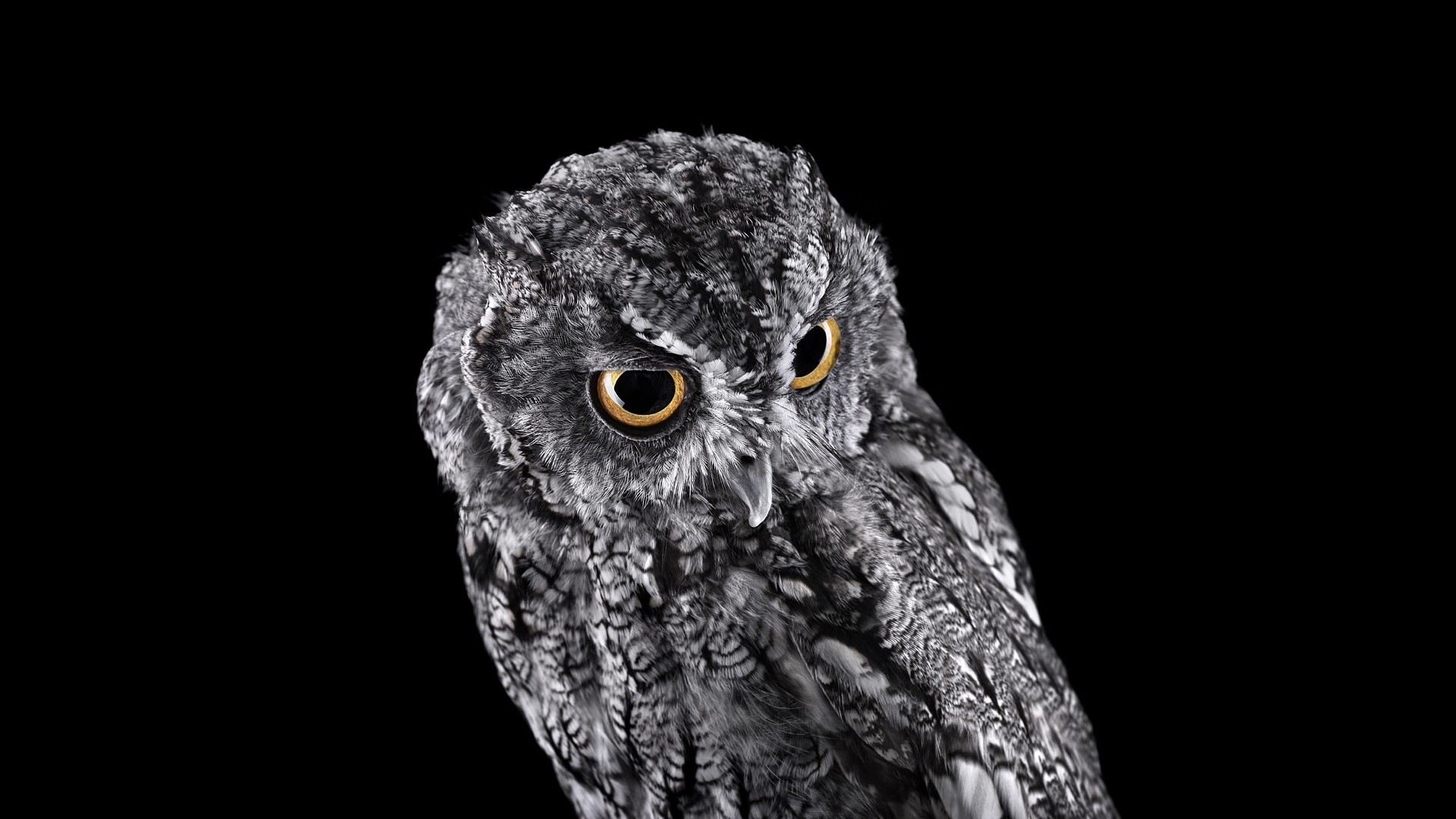 owl wallpaper 77 pictures