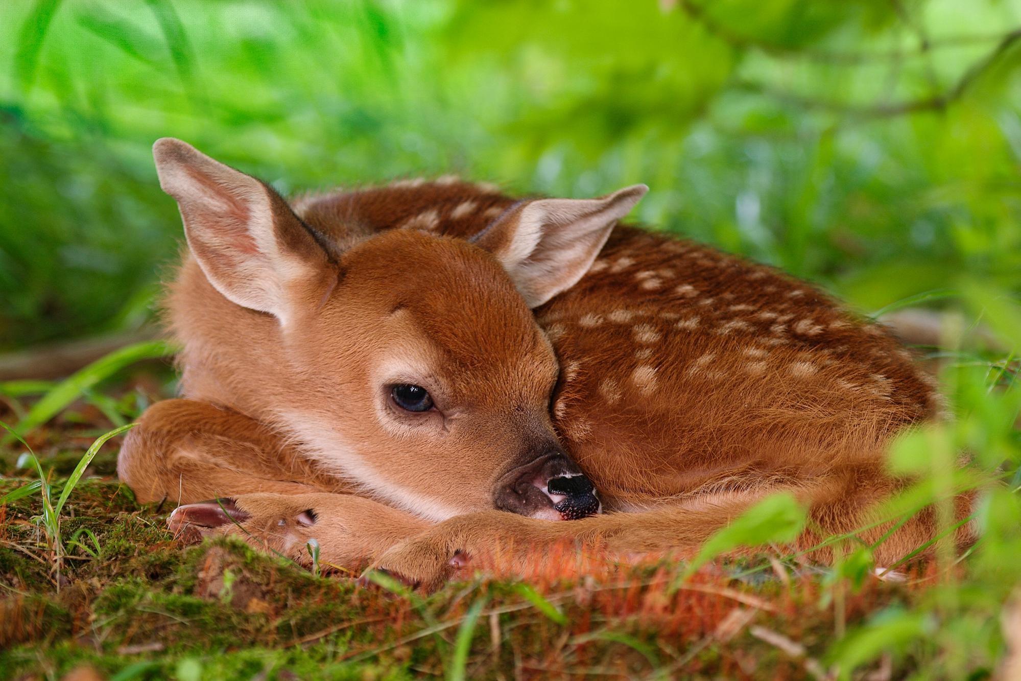 Baby Animal Wallpaper For Desktop: Cute Baby Animal 2018 Wallpaper (72+ Pictures