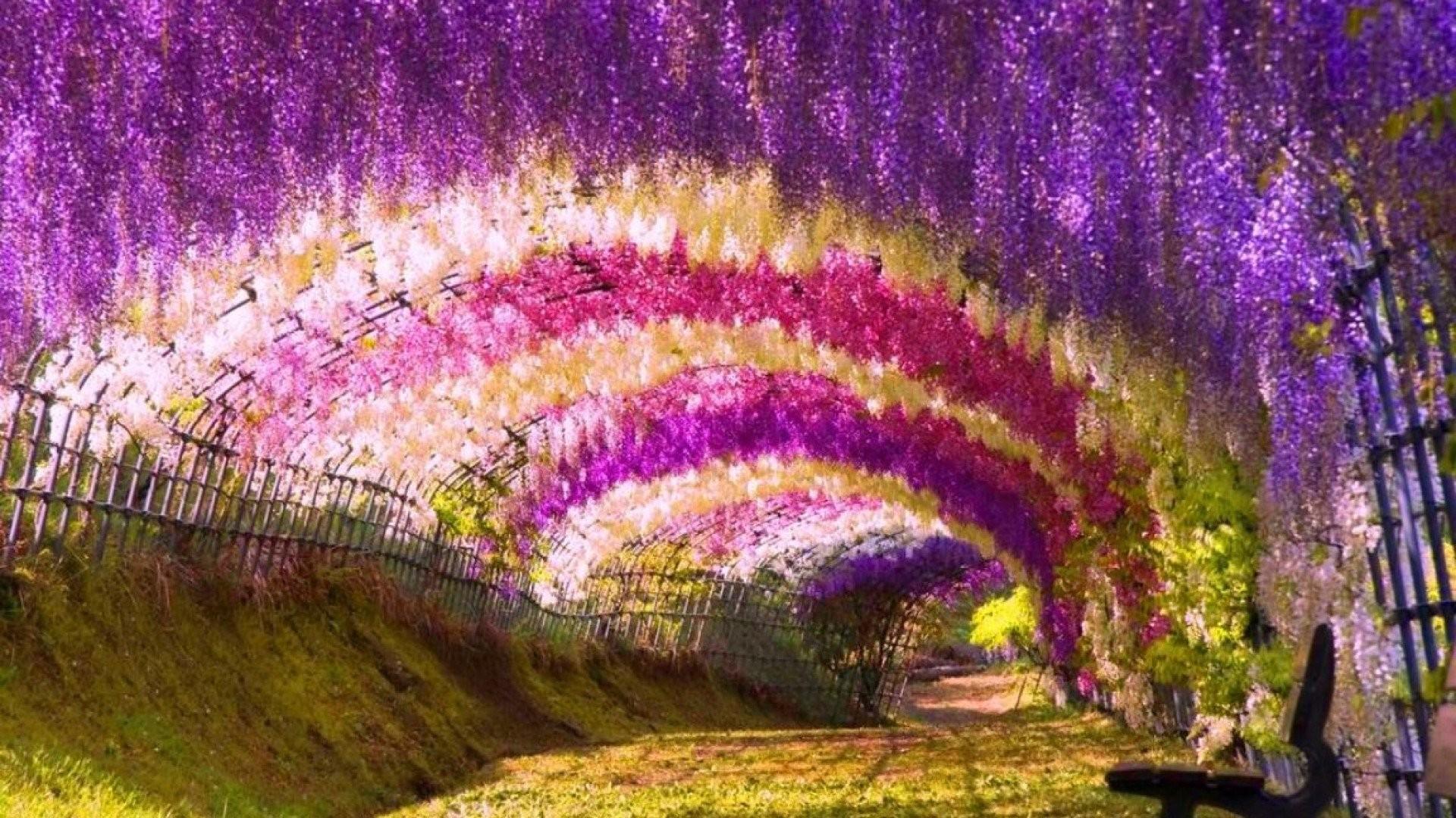 Garden Desktop Wallpaper 64 Pictures