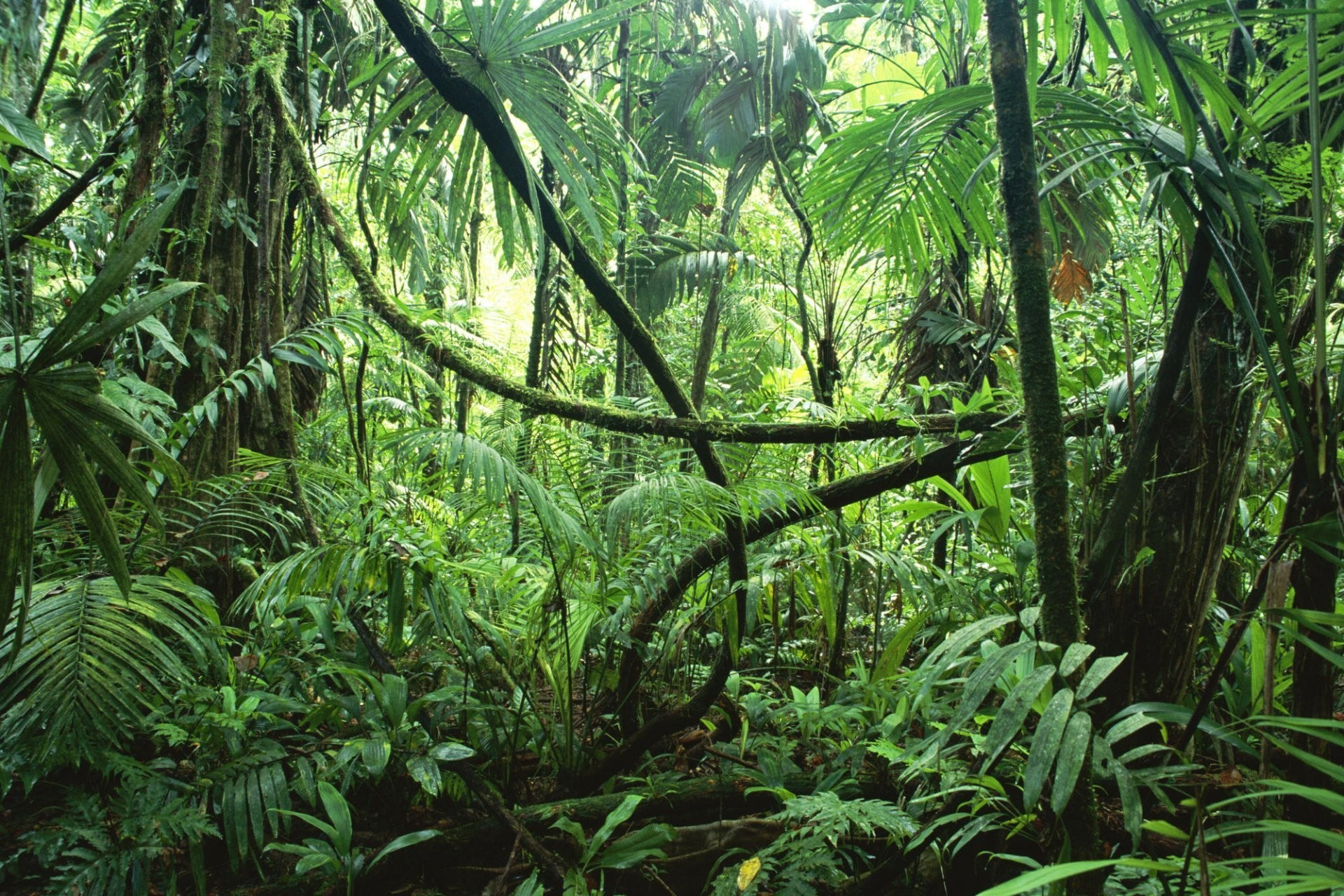 Tropical Forest Wallpaper 51 Pictures