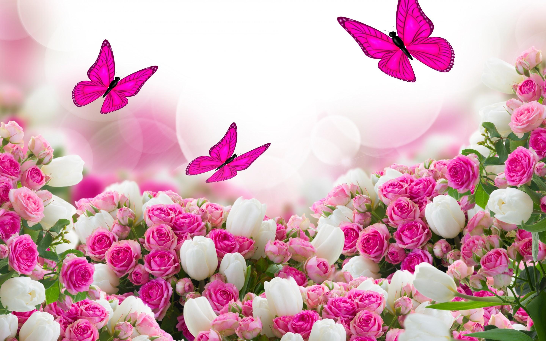 rose garden wallpaper (51+ pictures)
