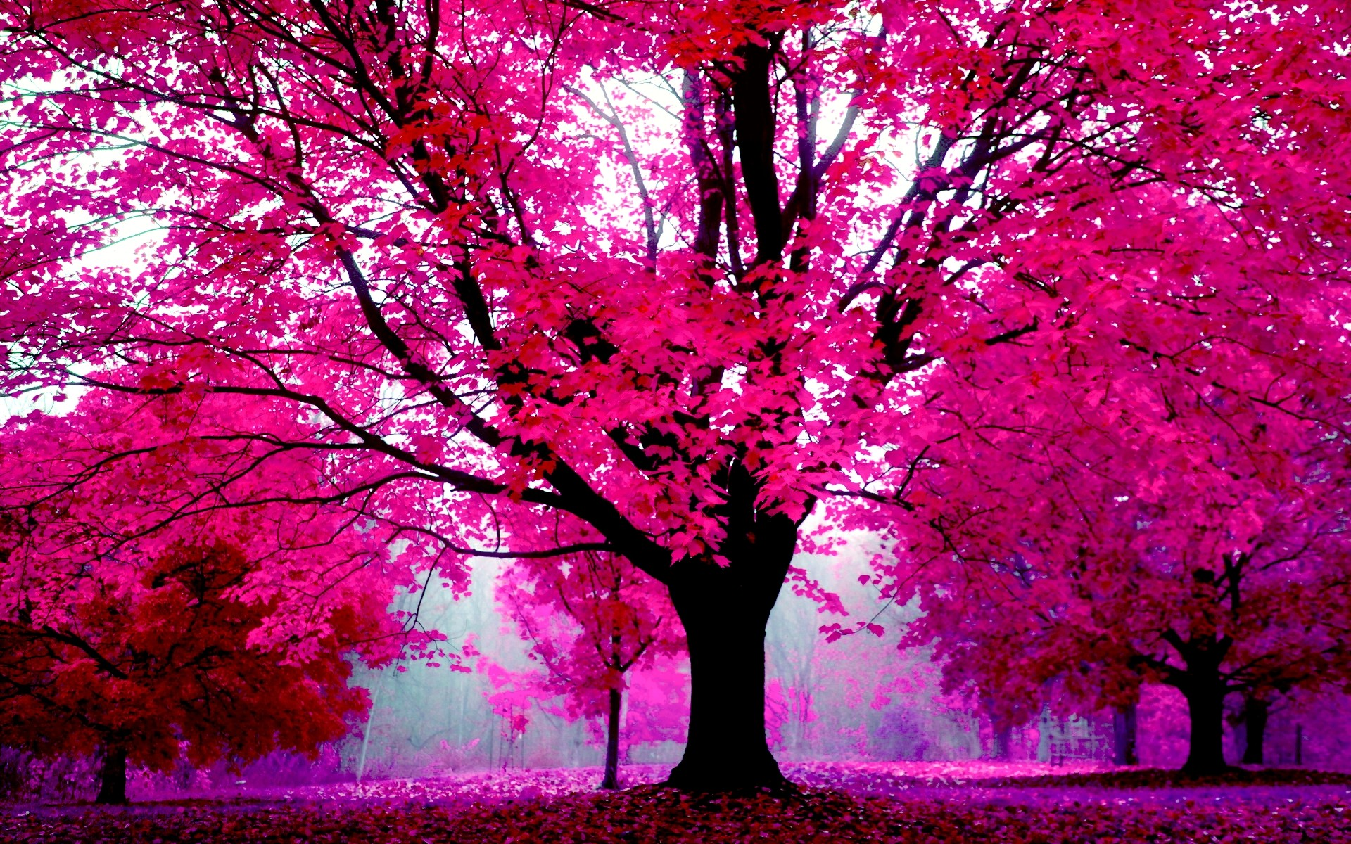 Pink Computer Background 60 Pictures