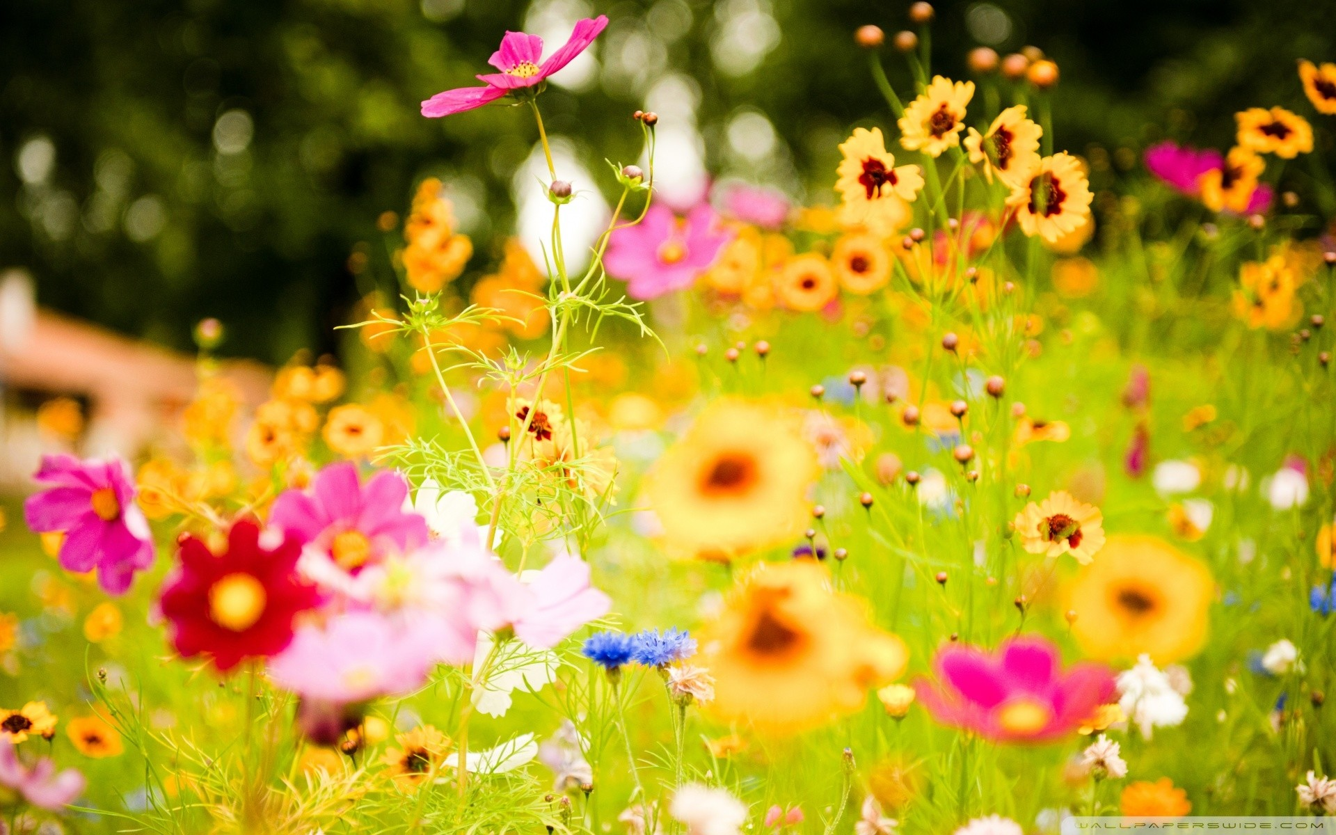 Spring flower desktop background 54 pictures 2560x1600 cute spring flowers hd desktop flowers desktop wallpaper new mightylinksfo