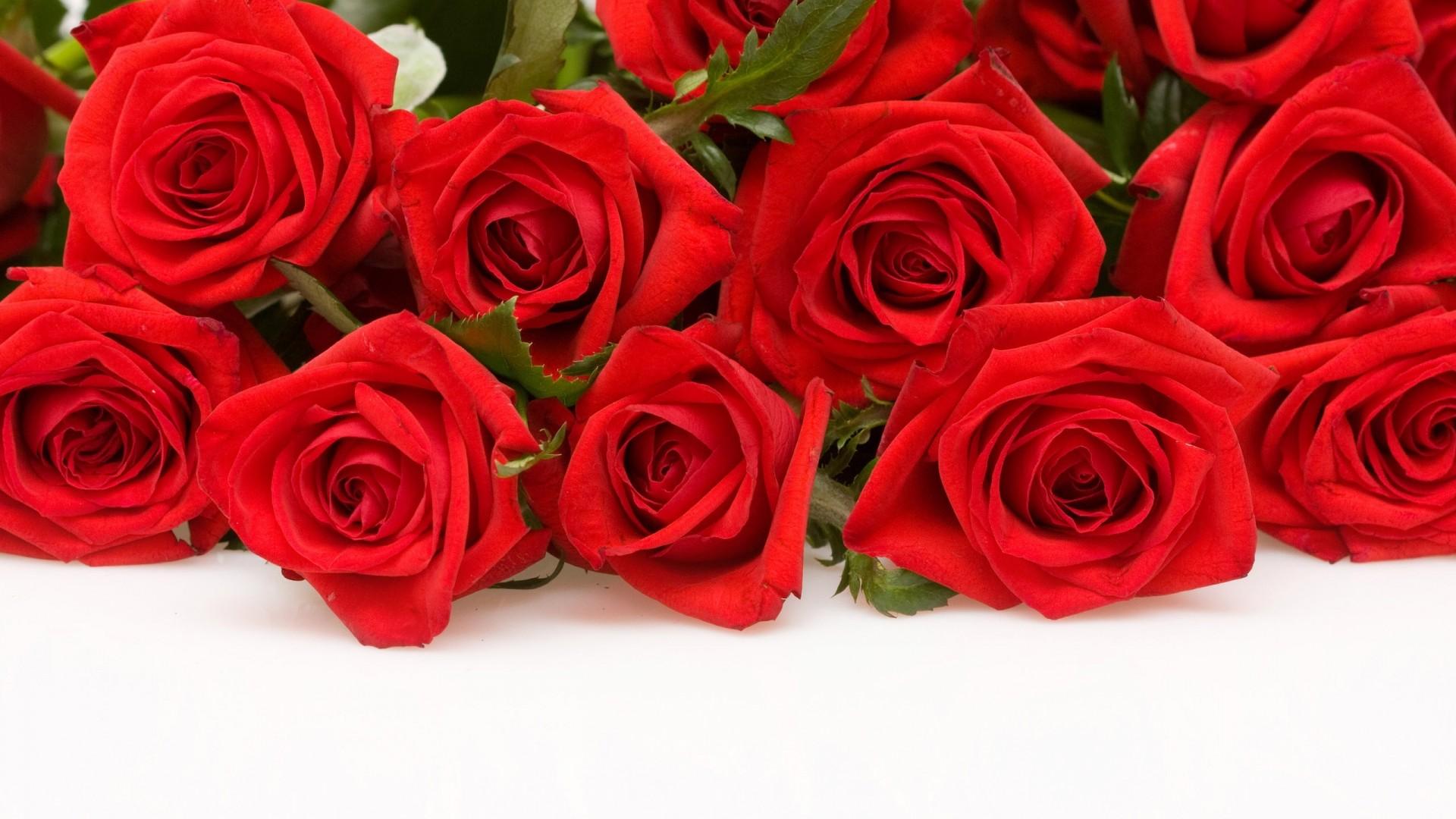 Red Rose Wallpaper Desktop 60 Pictures
