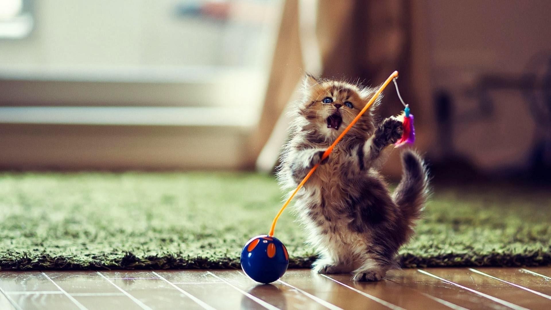 Cat Wallpaper Desktop 68 Pictures