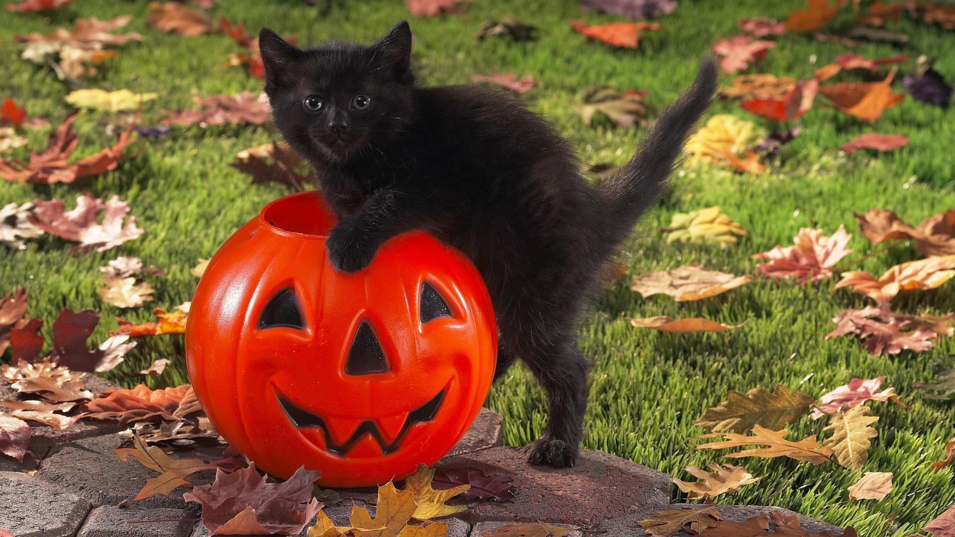 Cute Halloween Desktop Wallpaper 60 Pictures
