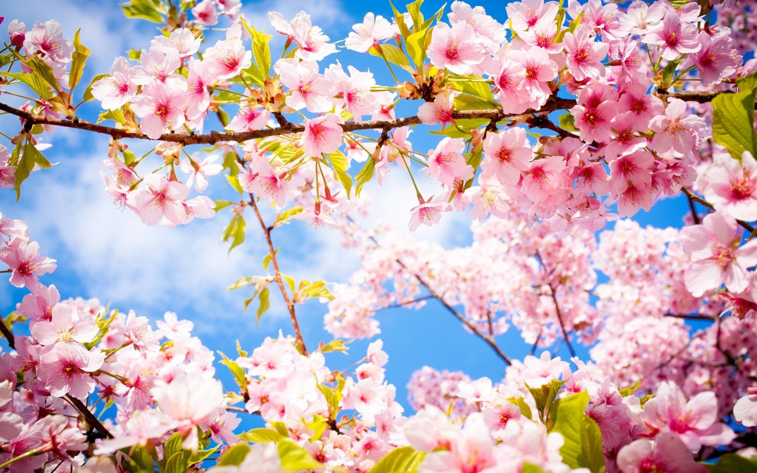 View Wallpaper Spring Beautiful Nature PNG